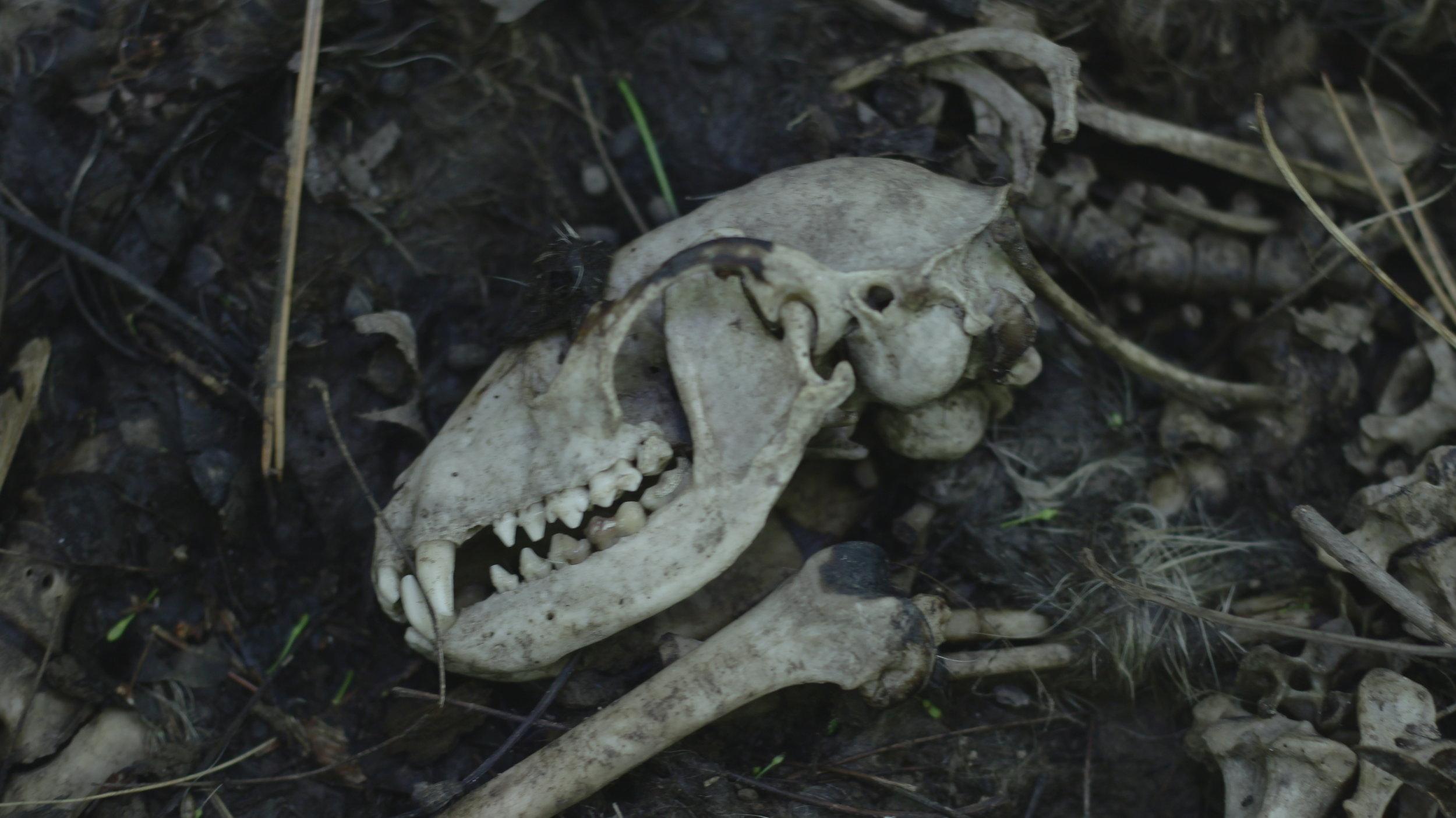 Cadavre non identifié ...