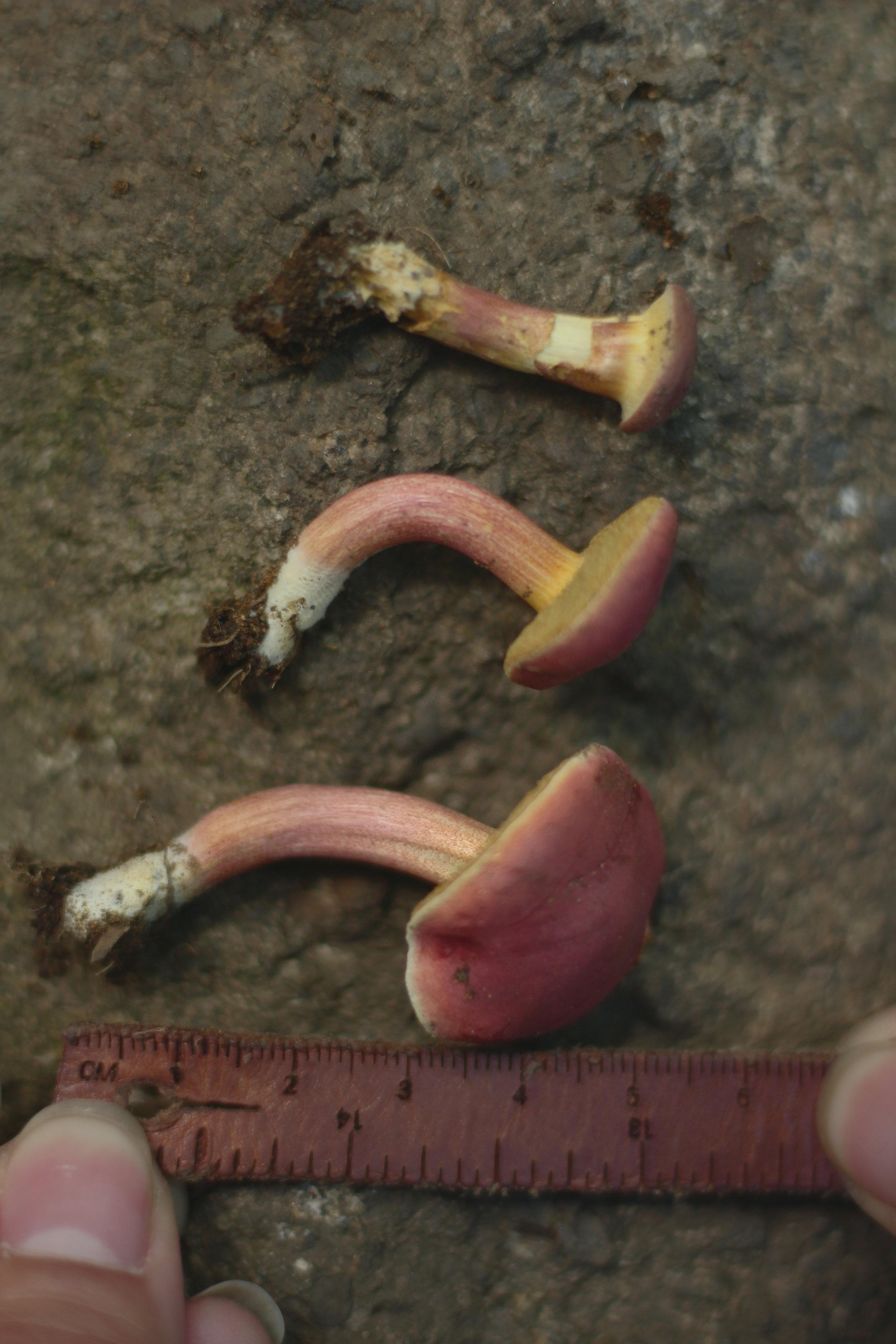 Jeunes spécimens très petits non identifiés