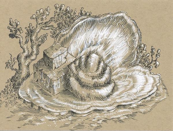 9.11.19 clam sml.jpg