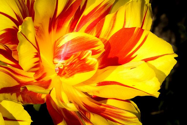 Big-Yellow-Flower.jpg