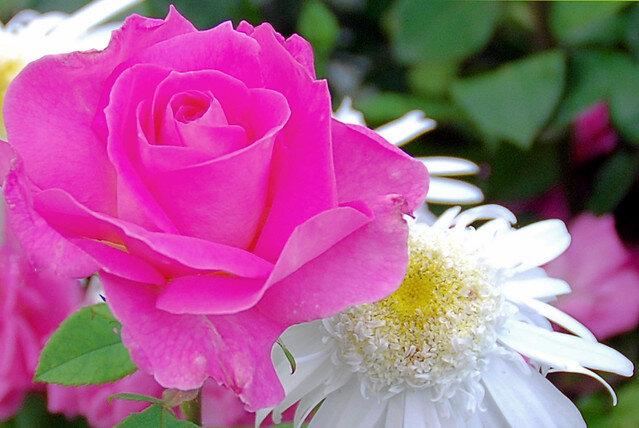 www.rosarm4u.com