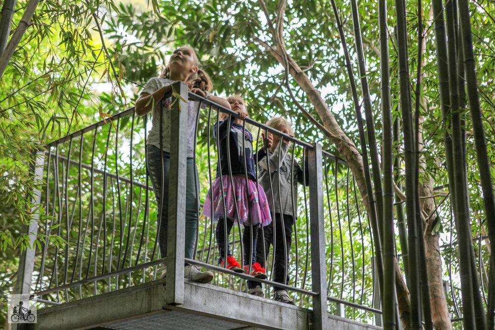 Copy of ian potter children's garden, royal botanic gardens, melbourne - mamma knows melbourne