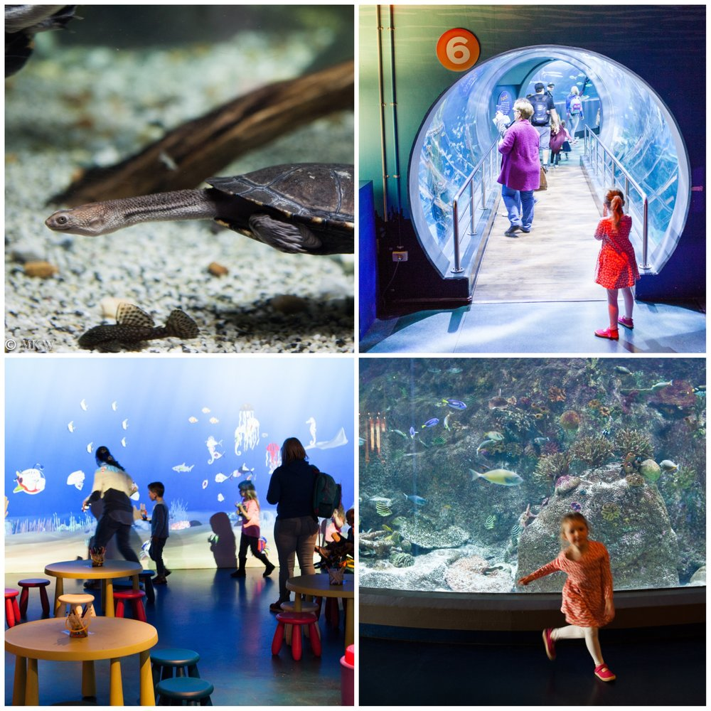 sealife aquarium, melbourne - mamma knows melbourne