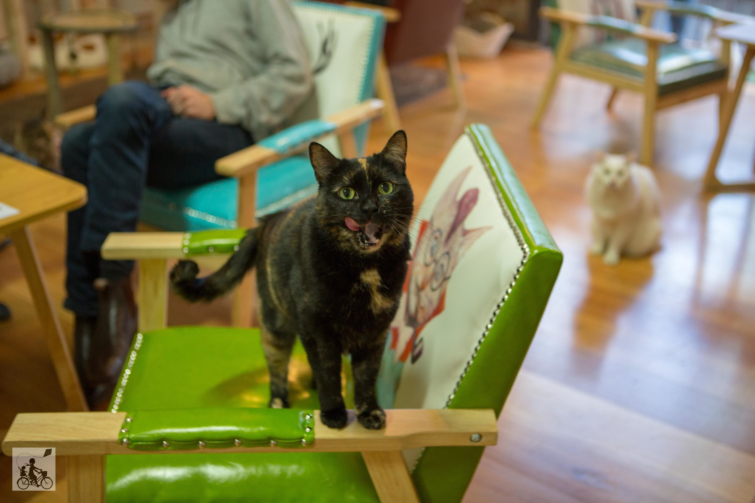 cat cafe, melbourne - mamma knows melbourne
