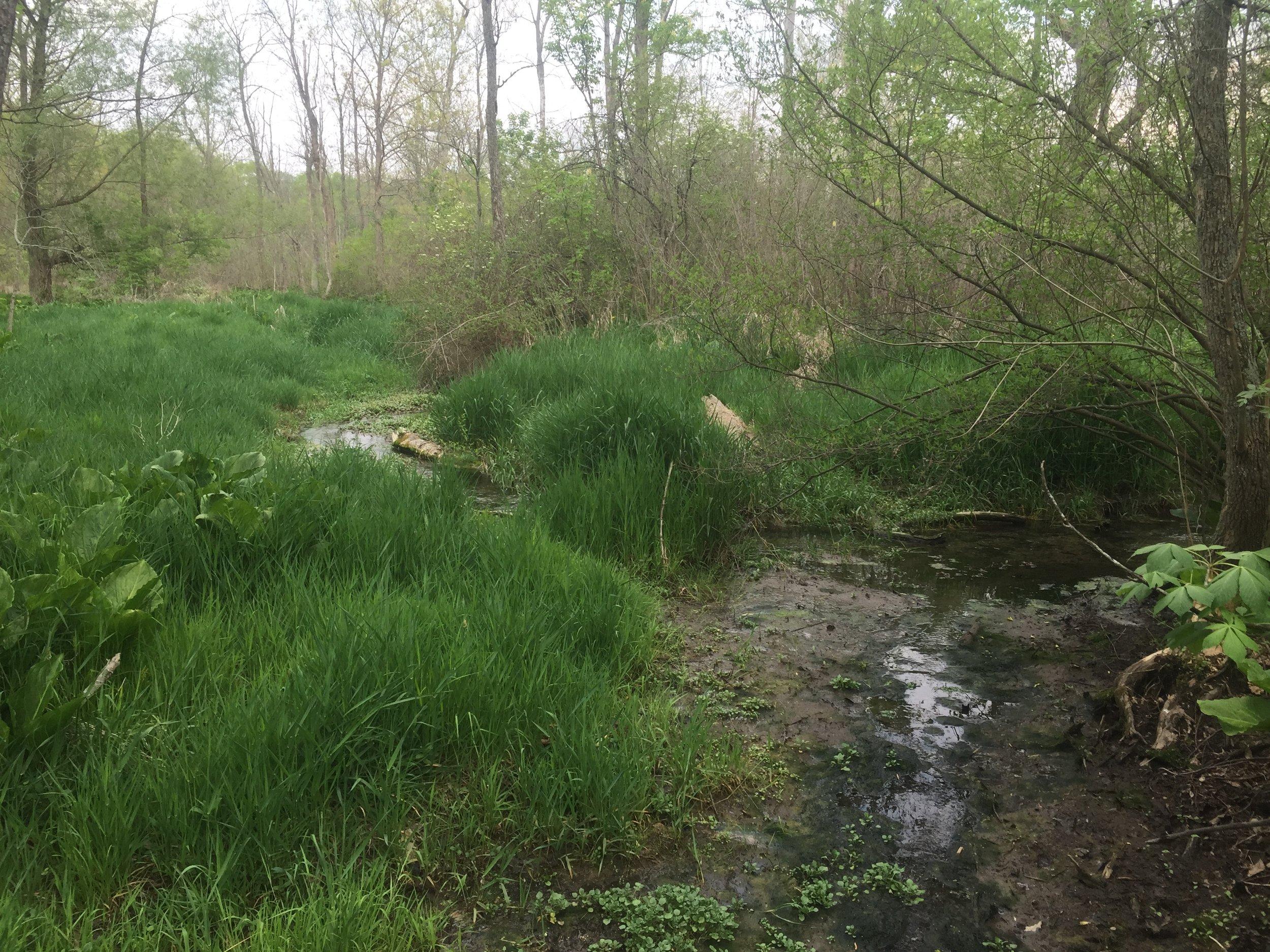 Wetland 1.JPG