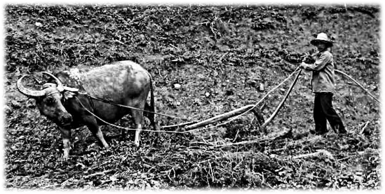 StrengthsFinder Sinagpore - Ploughing.jpg