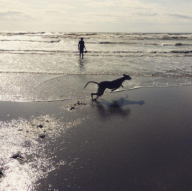 Boy, Sea and dog.