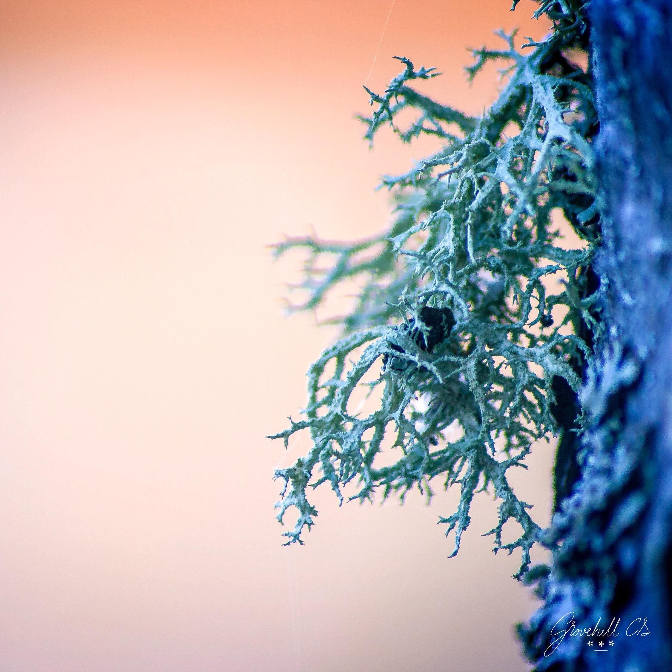 Tree Moss   Nature Photography