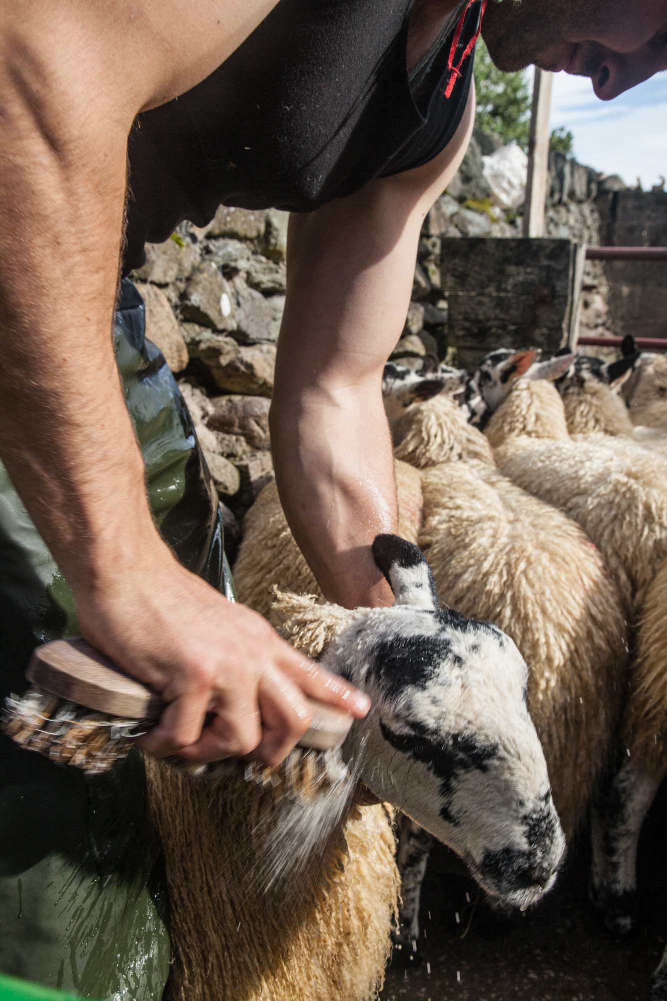 lamb-slaughter-cleaning-preparation-6.jpg