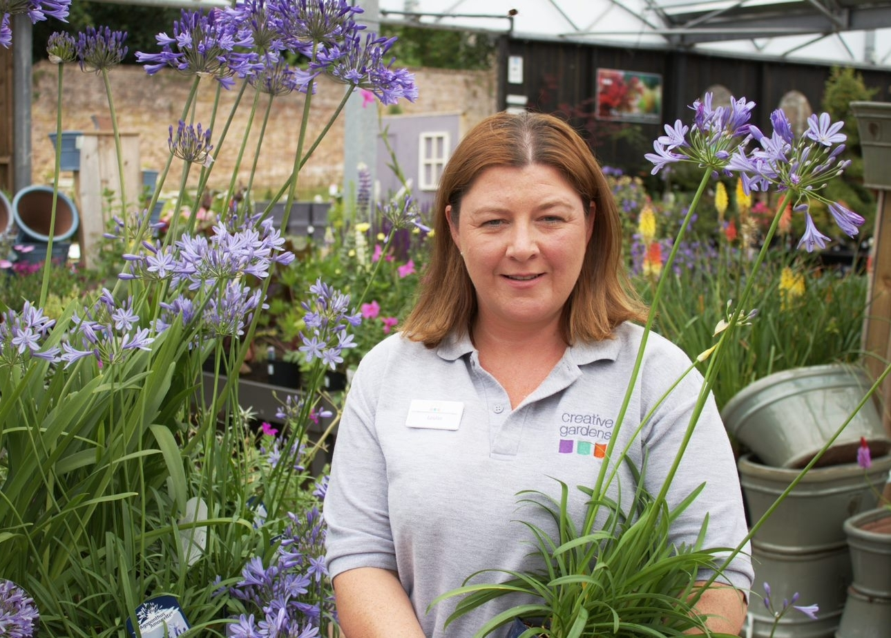 - Hi, I'm Louise and I've worked at Galgorm Castle for over four years. I've enjoyed seeing our business develop and I love the variety of my job. My favourite time of year is Spring; I love seeing all the lovely new plants coming into the centre. I really enjoy our Christmas shop and the buzz and excitement it brings. My favourite plant is Agapanthus, the trumpet like flowers are just great!