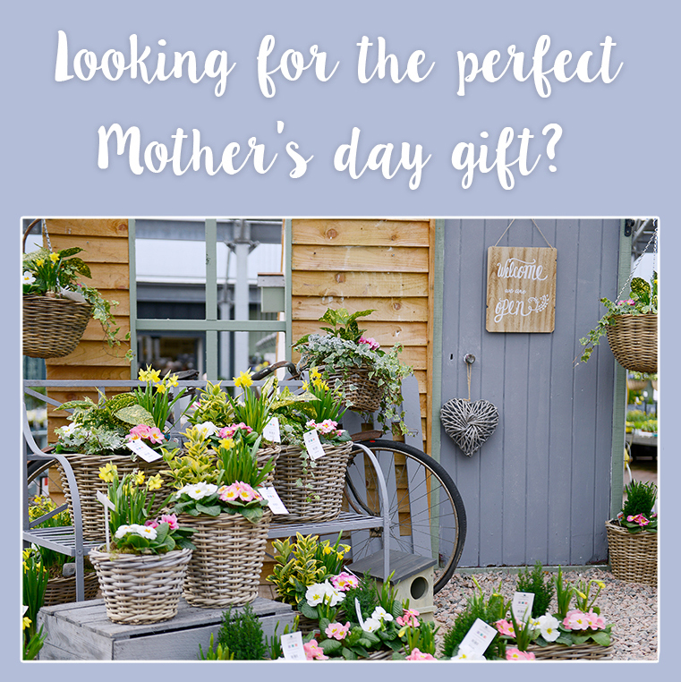 mother day email_2019_website.jpg
