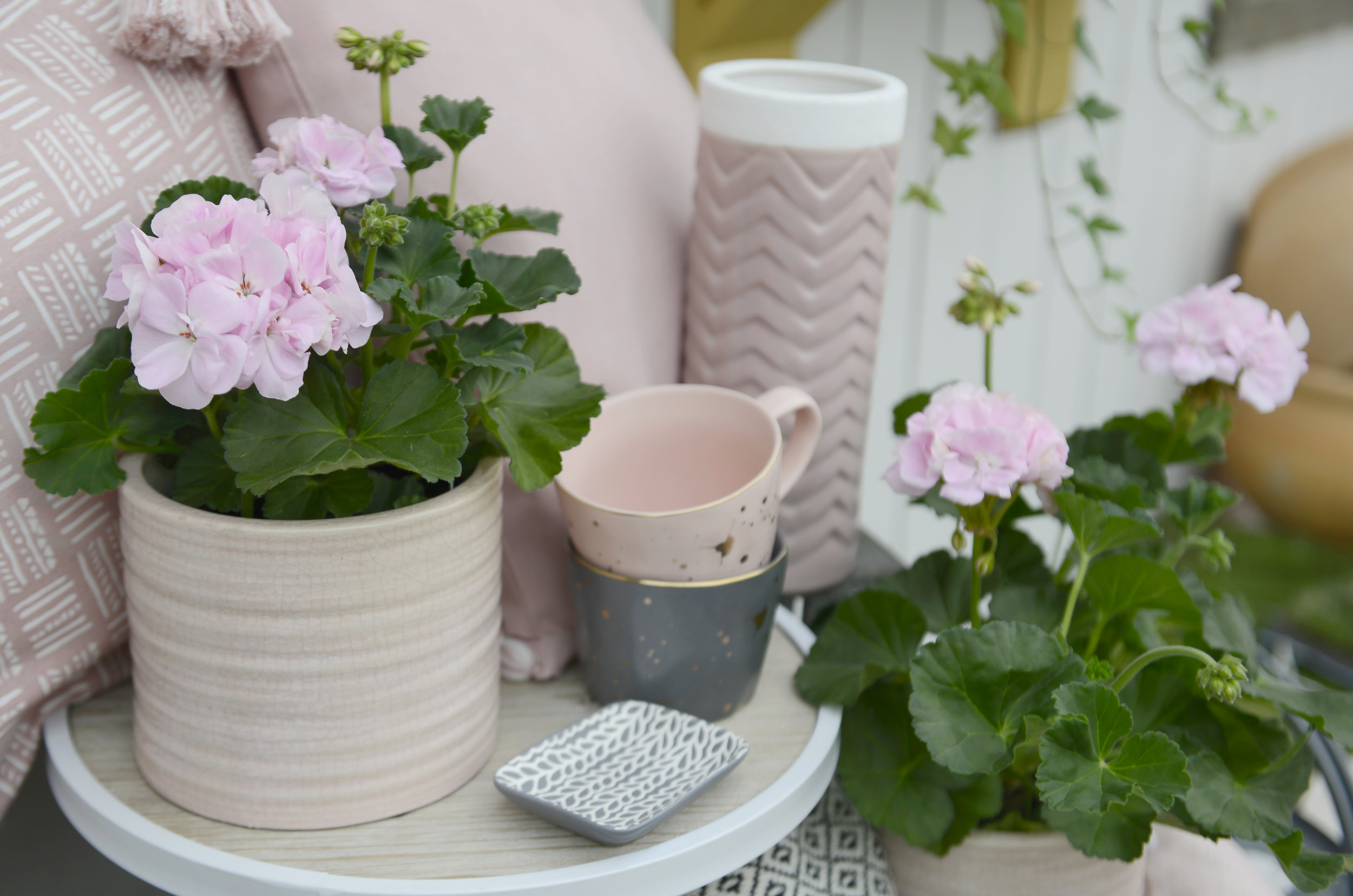 Here comes the Sun! - Summer has finally arrived and with it brings these gorgeous pale pink geraniums. And we all know pale pink and grey is a match made in heaven <3
