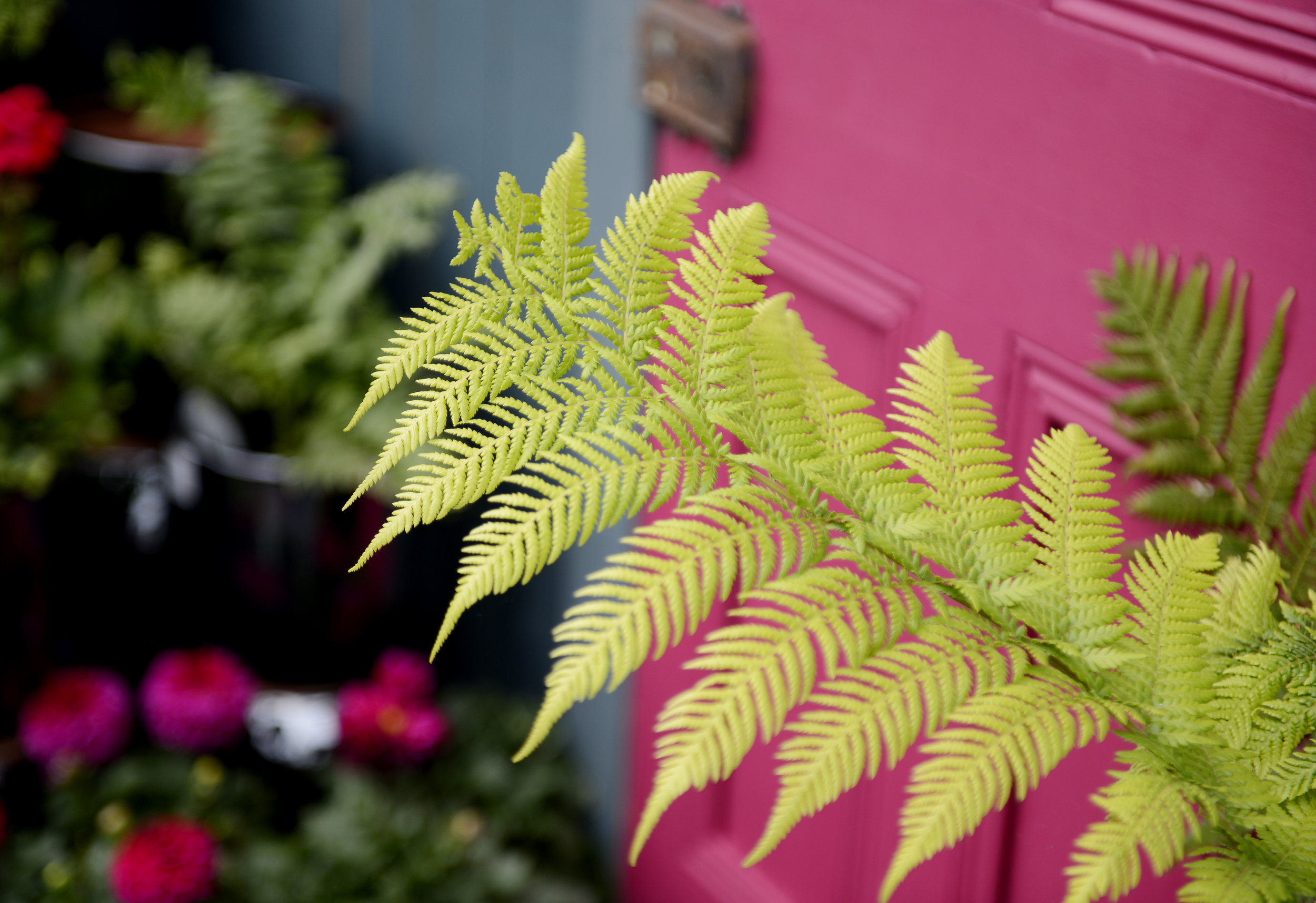 Fern Facts! - Easy going! Indoor ferns will be happy in your steamy bathroom with moist soil and low light.Shady species! Most outdoor fern species thrive in shadier areas of your garden- perfect for filling that awkward shaded spot!Purifying properties! A fern's lush foliage helps this plant to scrub the air of toxins.