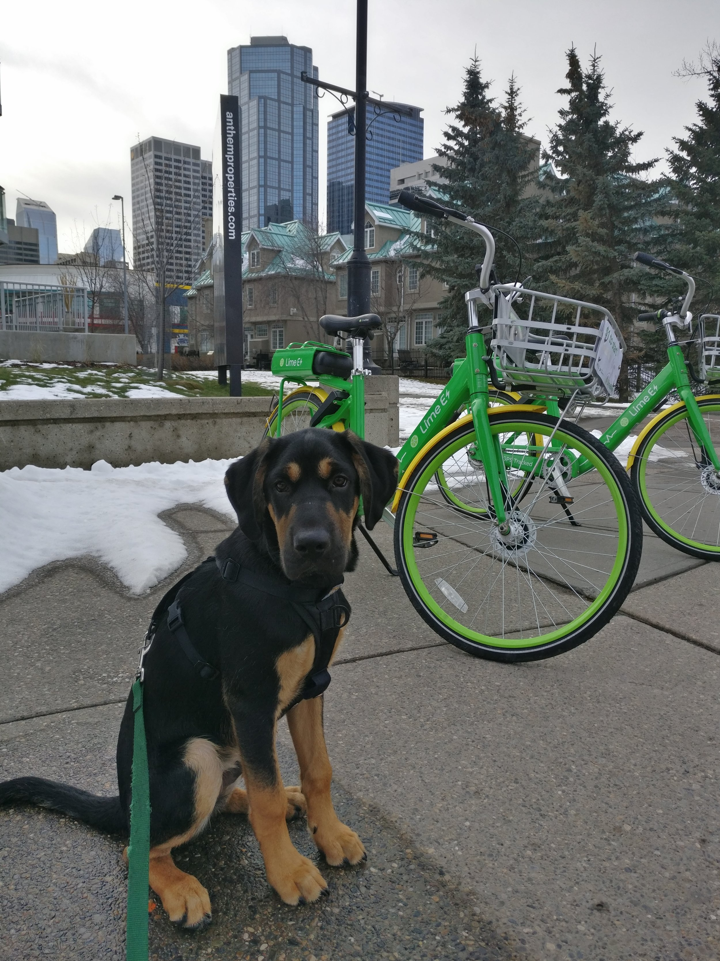 Calgary's electric bike share launched in November. Because it doesn't matter what season it is to ride a bike here.