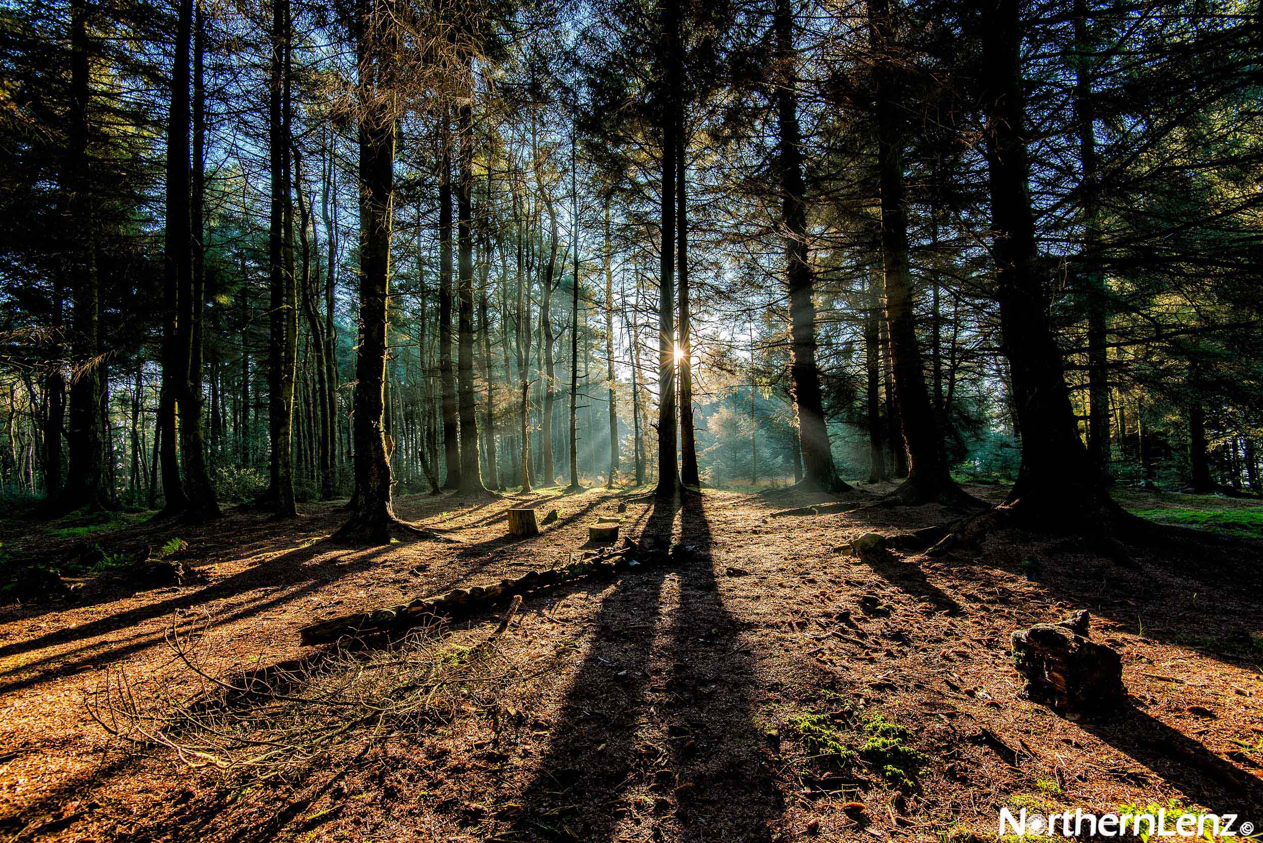 Magnificent light at Aitken Wood, Pendle which created such long dark shadows  Image Ref: MT07