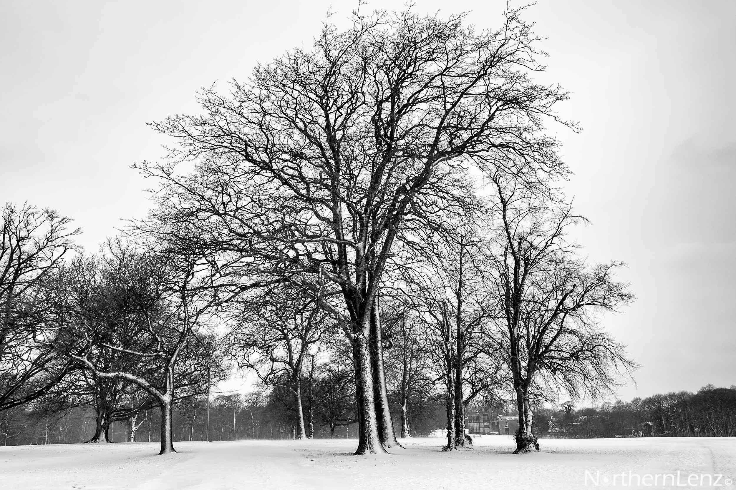 Wintry scene in the park  Image Ref: MT06