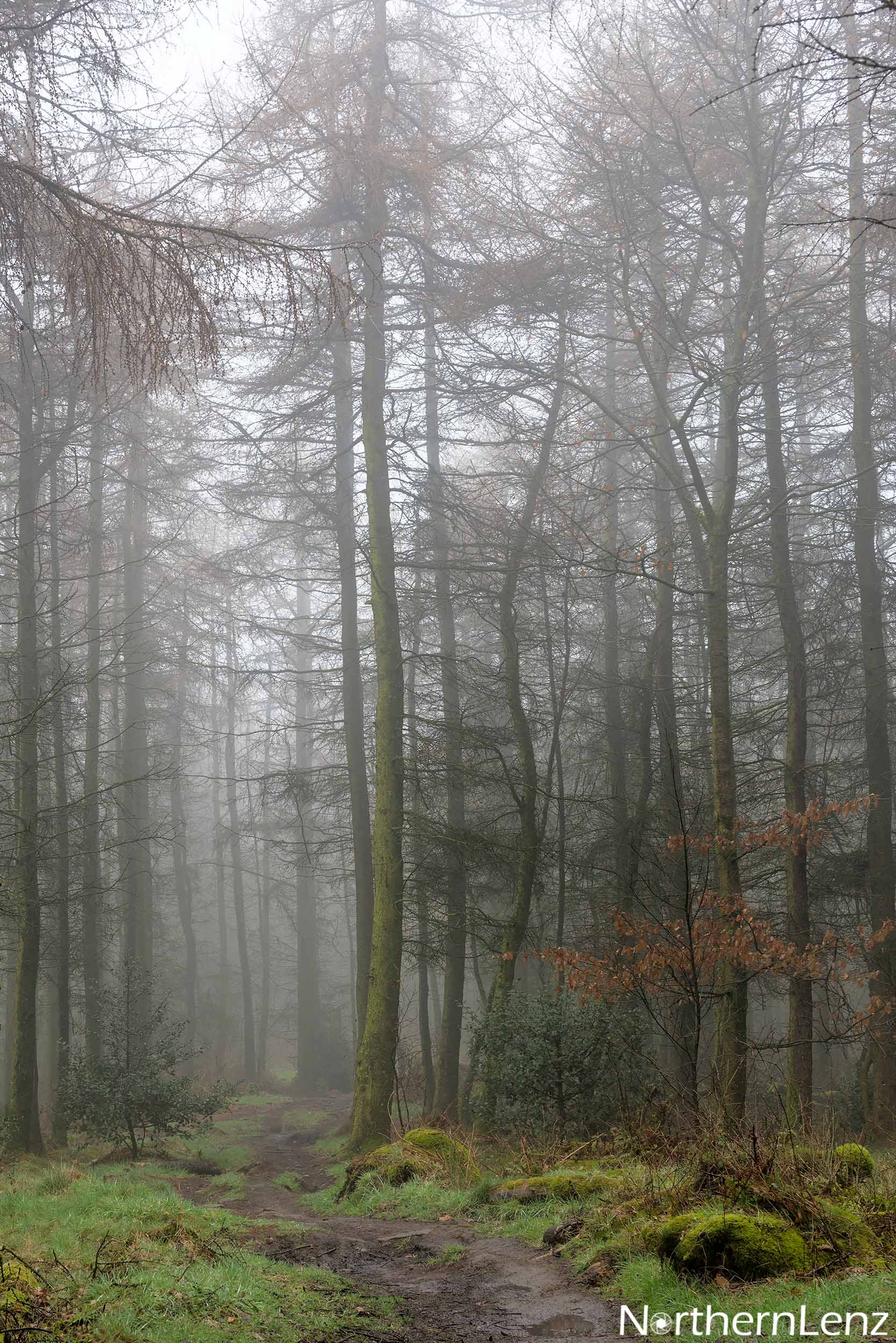 Venturing into the mist woods at Healey Nab, Chorley.  Image Ref: MT09