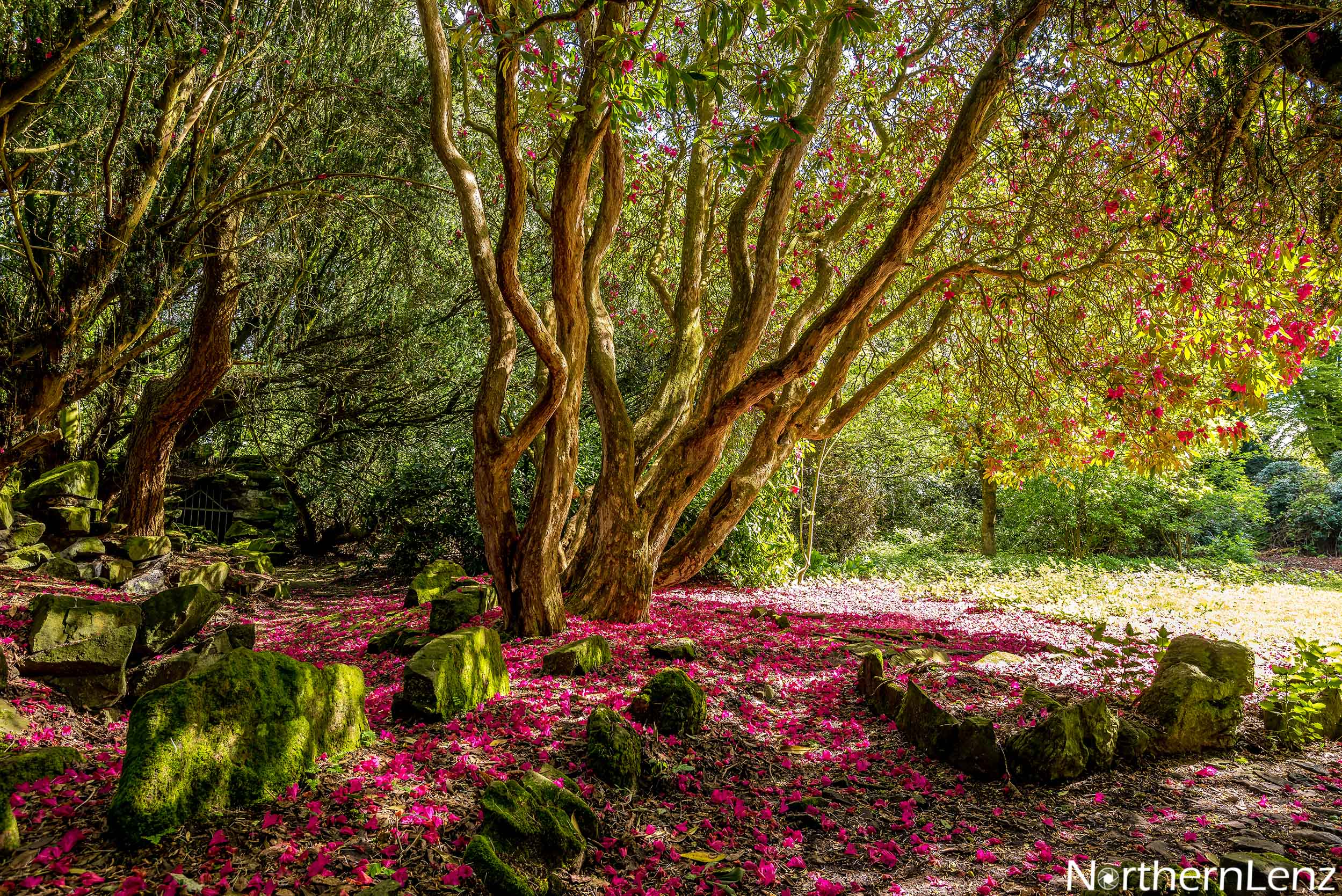 Such a magical place with its carpet of colour  Image Ref: MT05