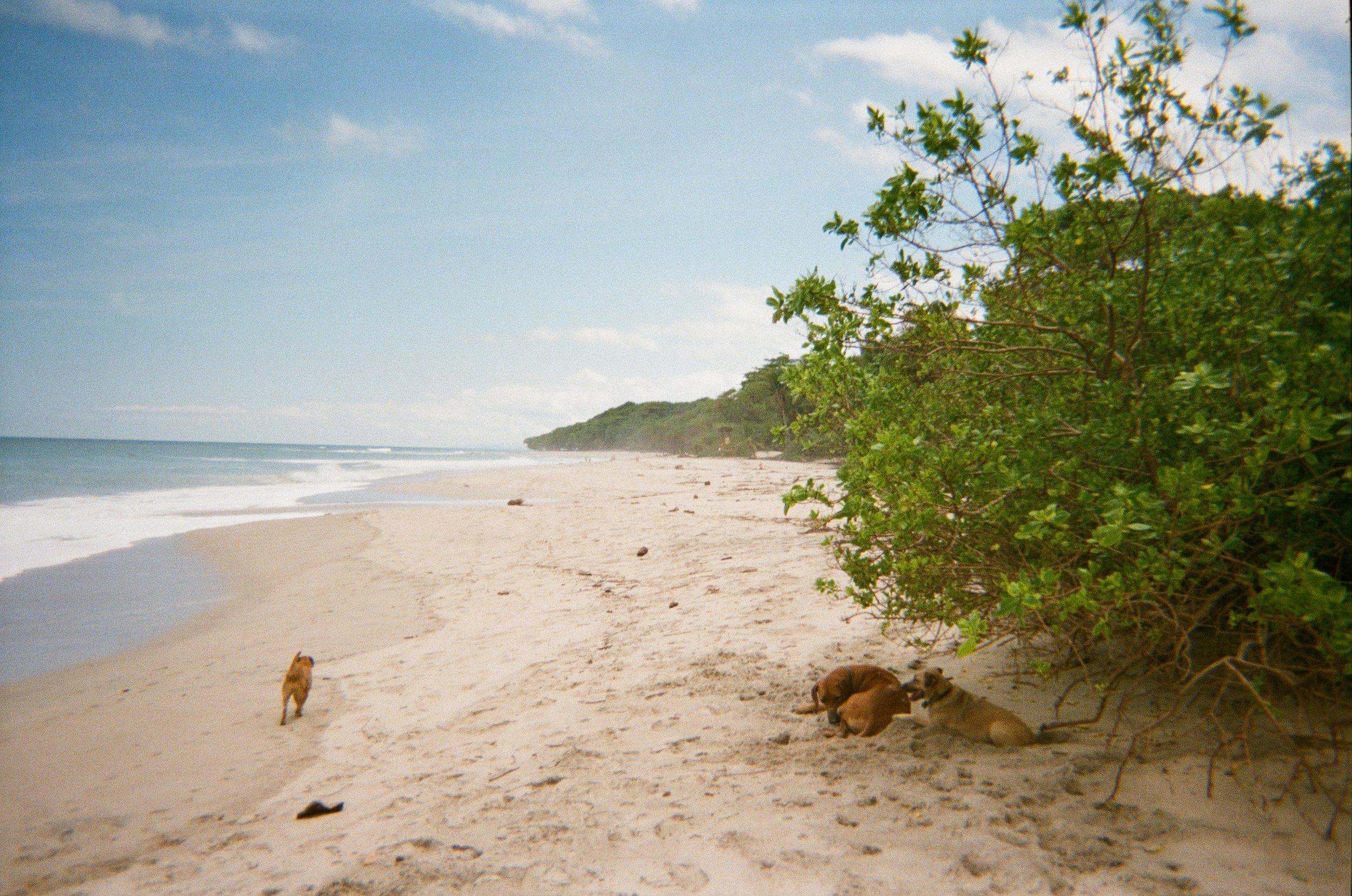 Beach doggos