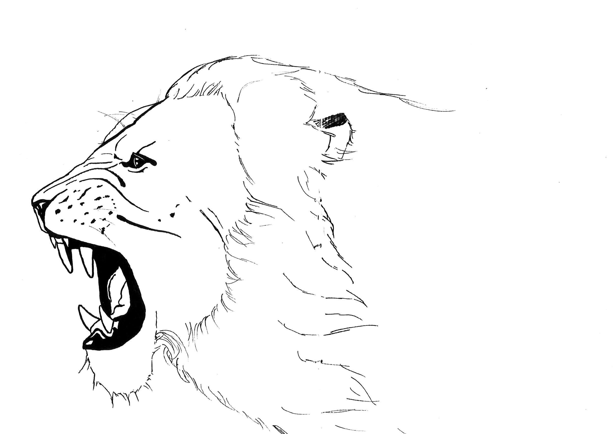 Rawrrr  Illustration
