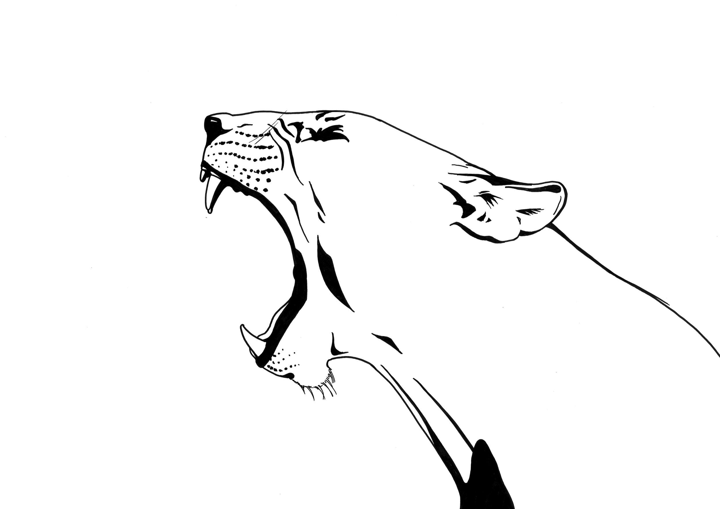Rawr!  Illustration