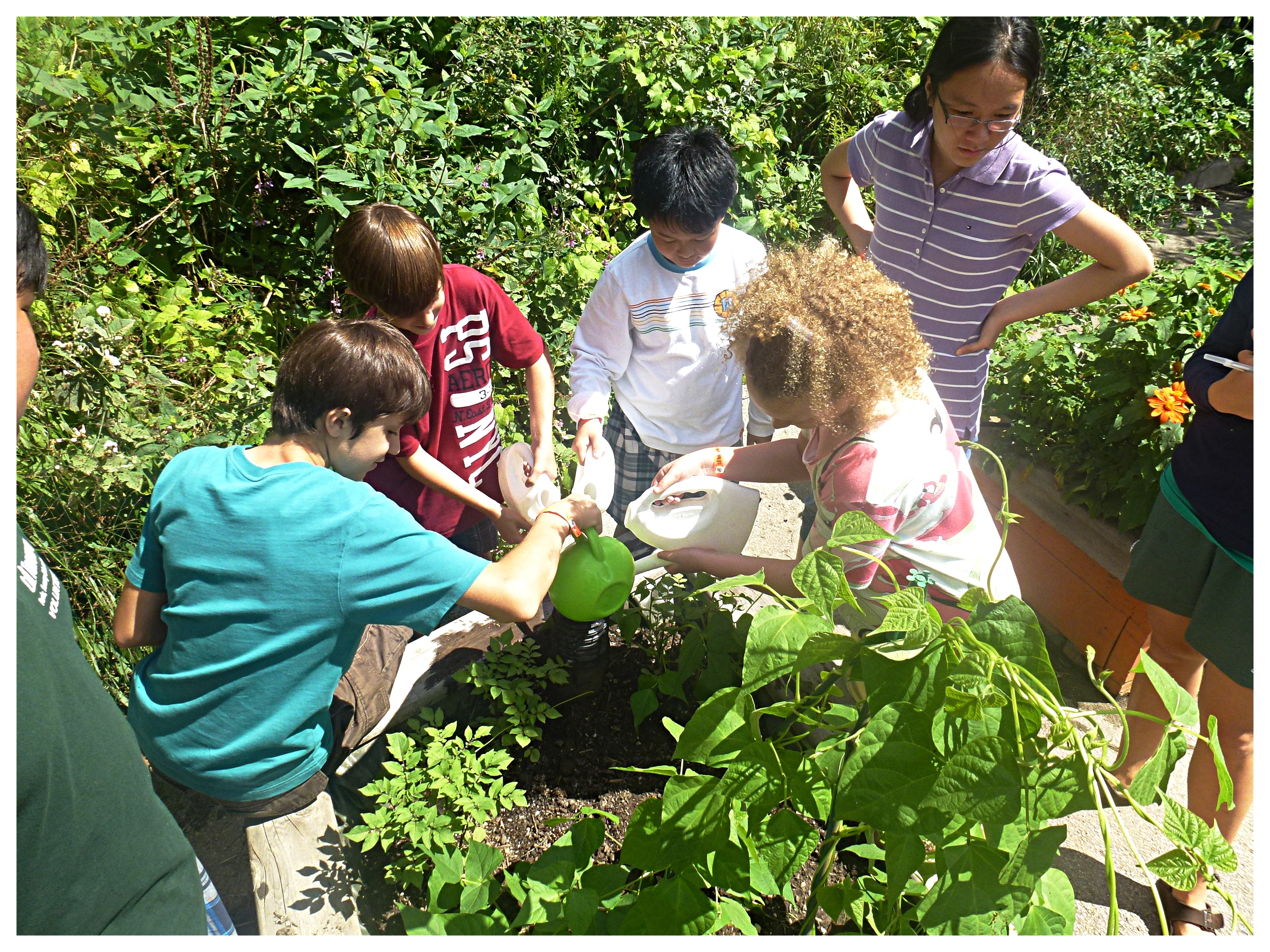 Kids in a community garden try out their SIP raised-bed that reduces watering needs and supports plant health.