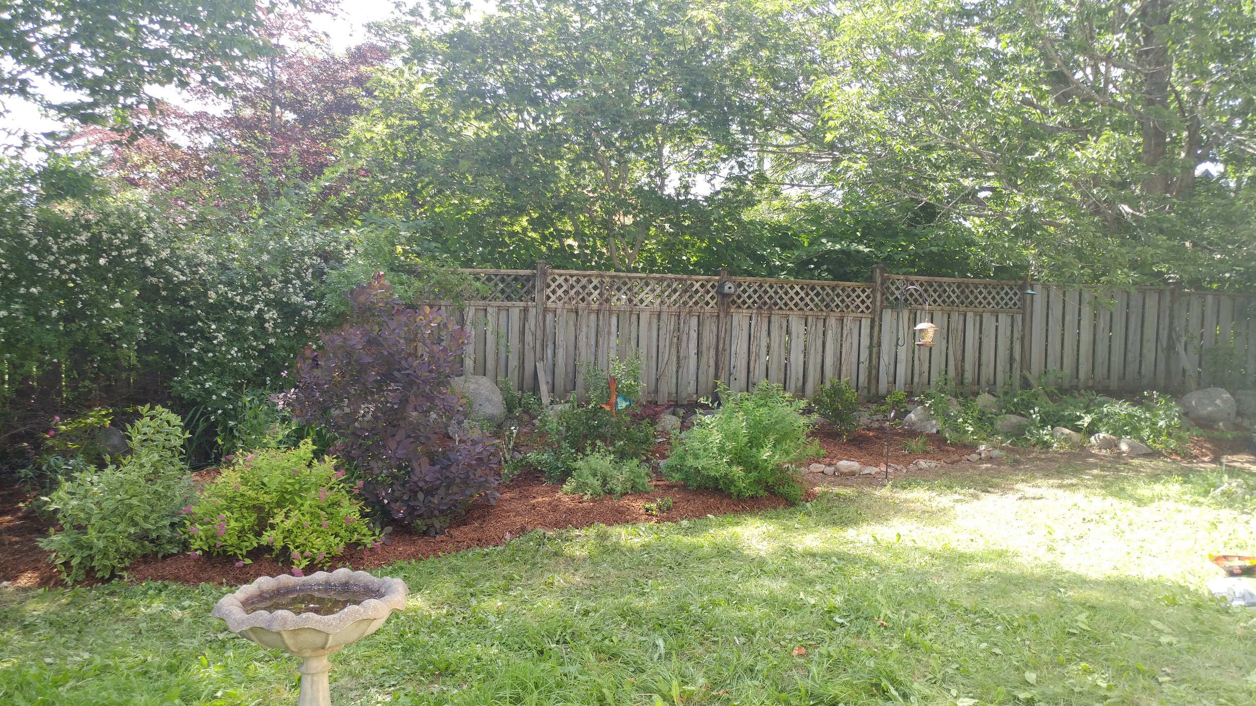 AFTER: A good weeding reveals shrubs and perennials that were struggling to compete. Mulch and a clean edge completes the look  ( Mahone Bay , Nova Scotia) .