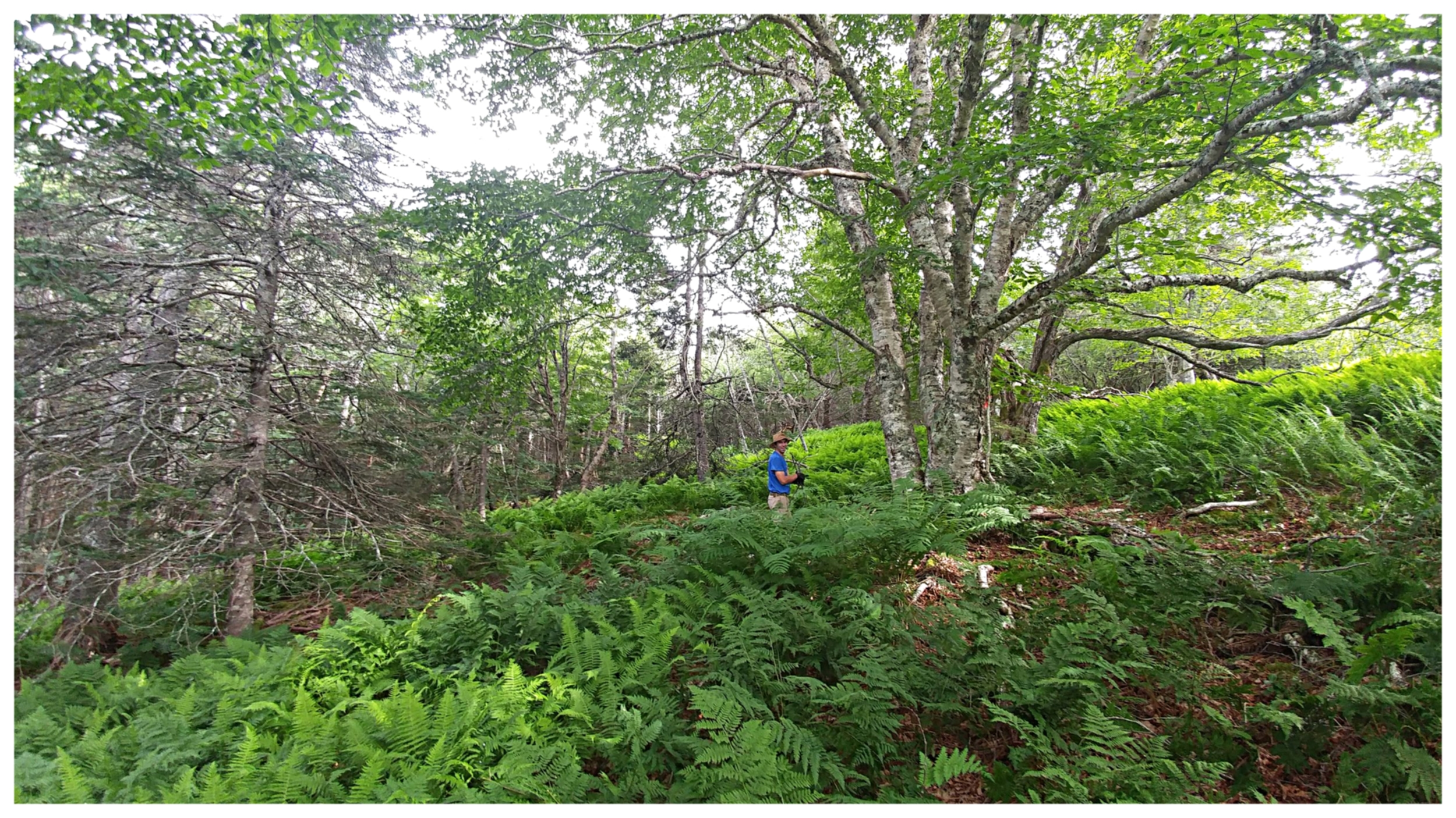 Caring for a natural forest trail.