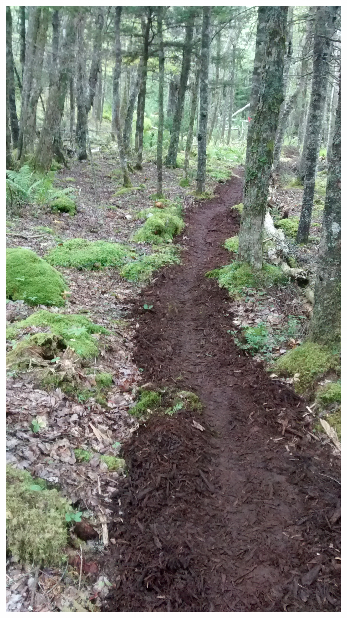 Mulch trail (Rose Bay, NS).