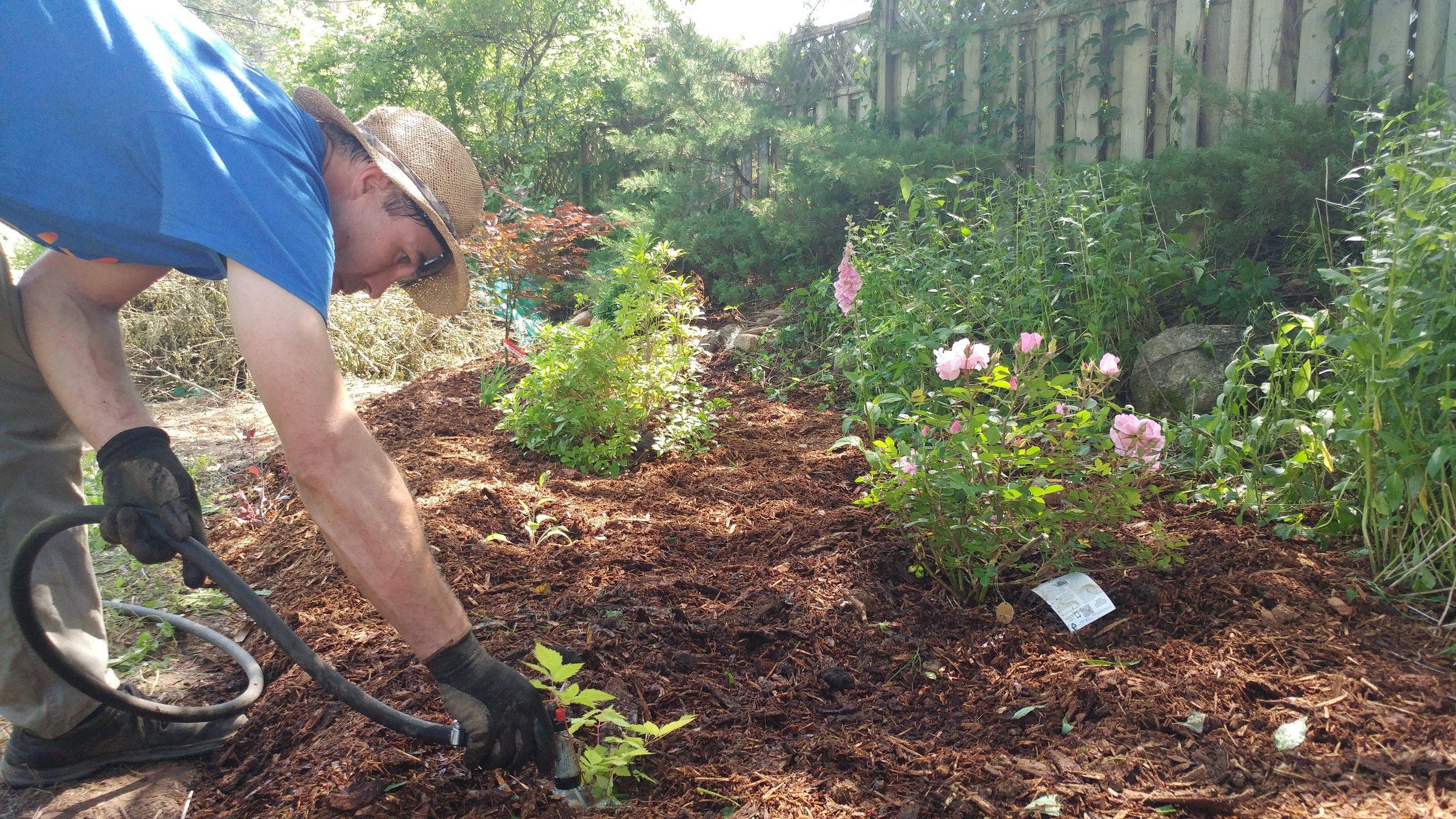 Guy Doucette Earthshine Gardens watering Mahone Bay.jpg