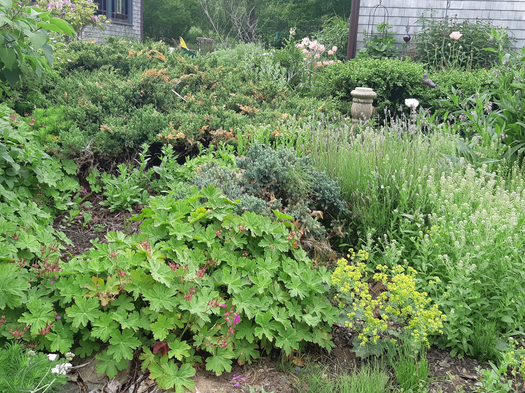 An old perennial garden after some TLC (Lunenburg).