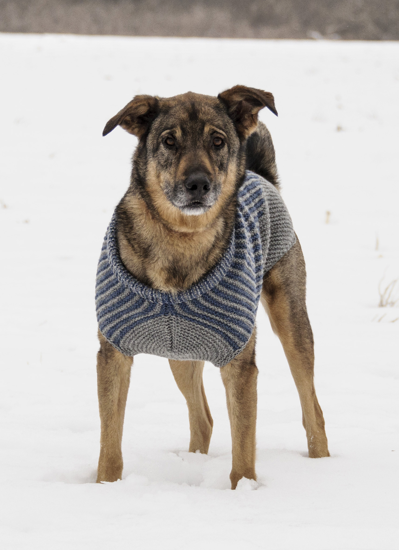 <strong>Bird Island Dog Sweater</strong><br>.<br>.