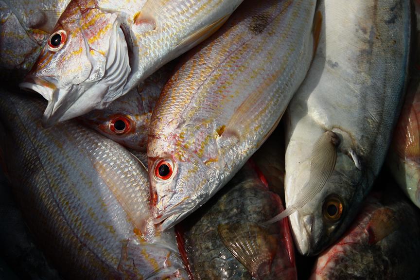 oldharborfish.jpg