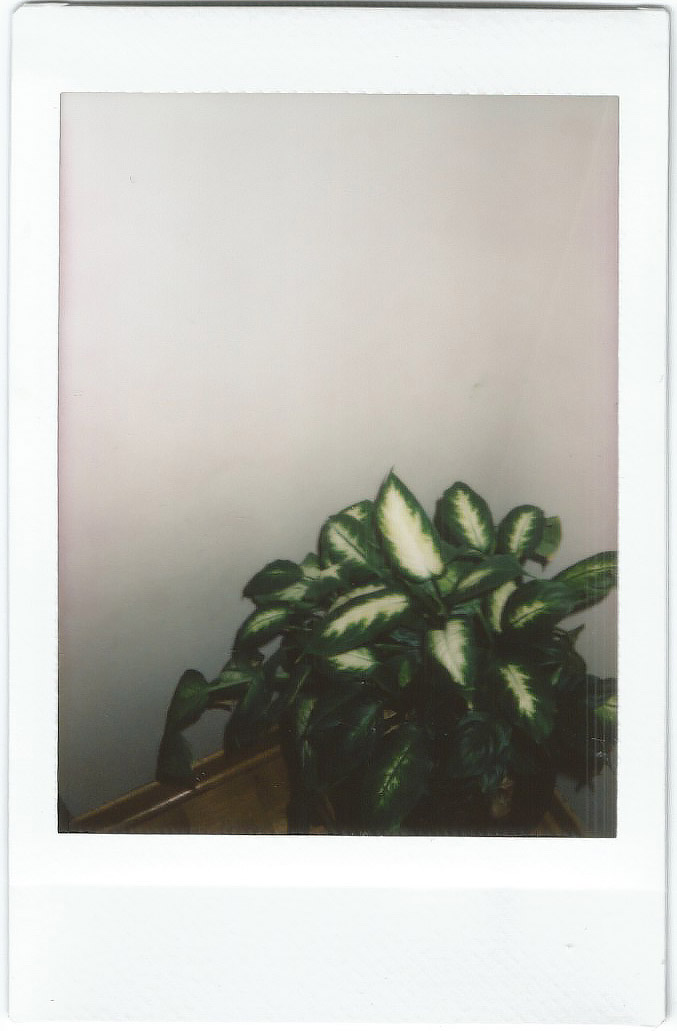 plant p.jpg