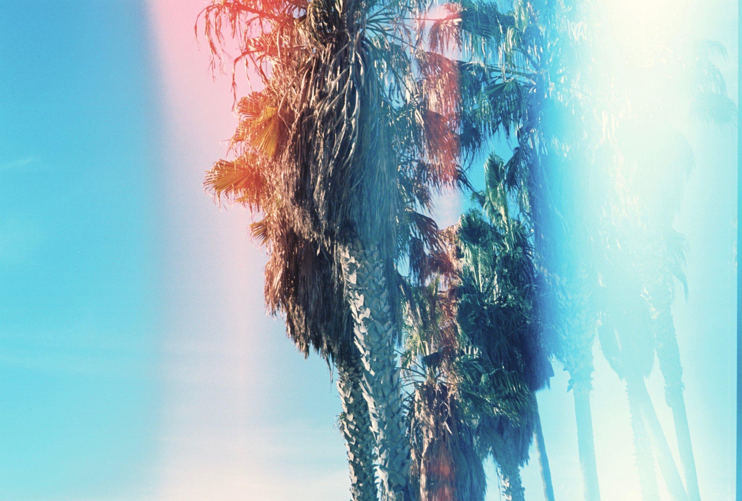 venice palms.jpg