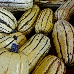 Delicata   Rich, sweet, flavorful yellow flesh tastes like a mix of chestnuts, corn and sweet potato. Quick-cooking with a thin, edible skin. Highly seasonal.   Best uses: sauteéd until caramelized, broiled, baked.