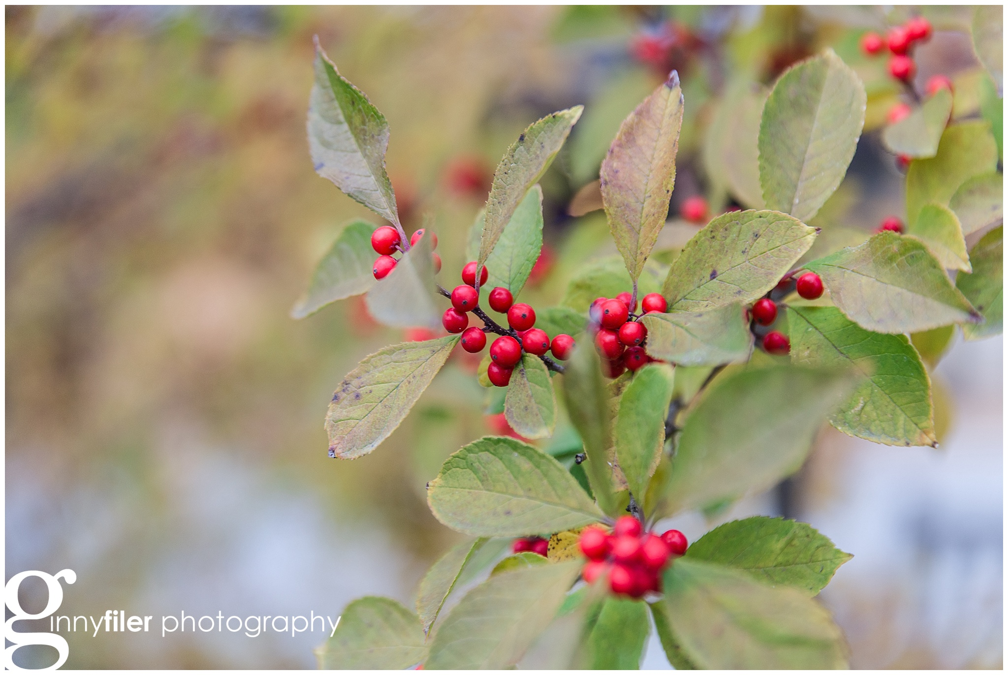 longwood_Christmas_0002.jpg