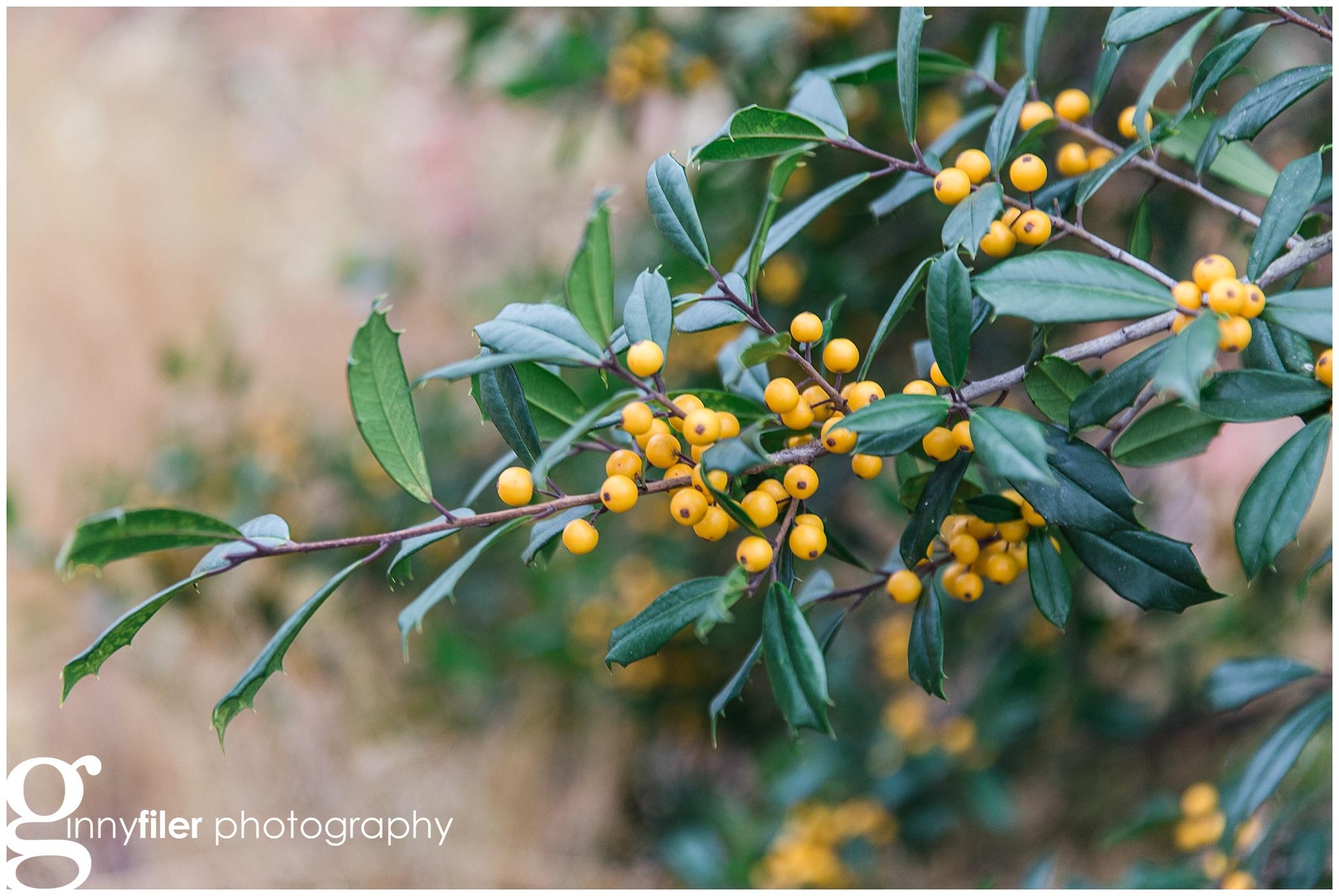 longwood_Christmas_0003.jpg
