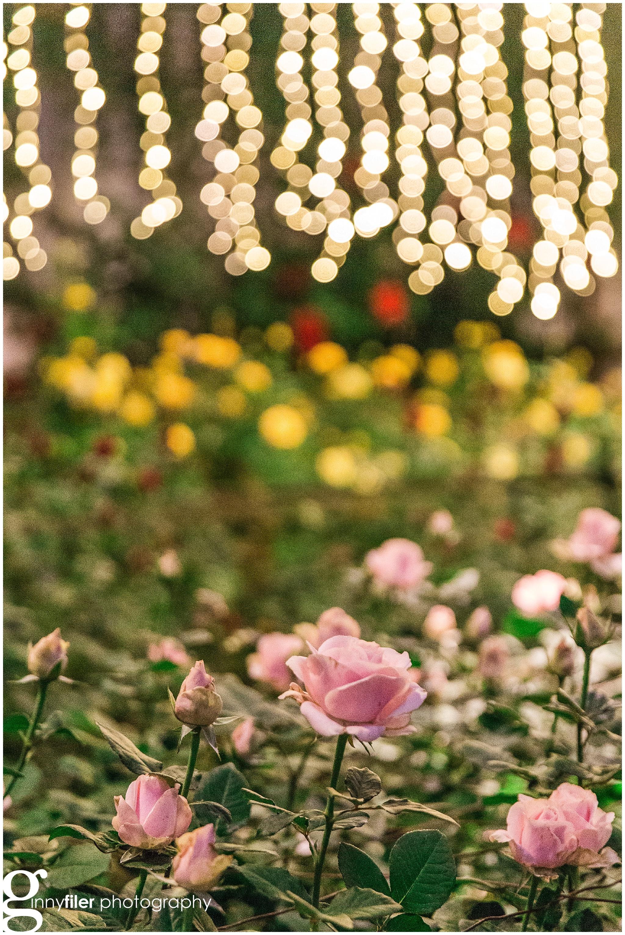 longwood_Christmas_0021.jpg