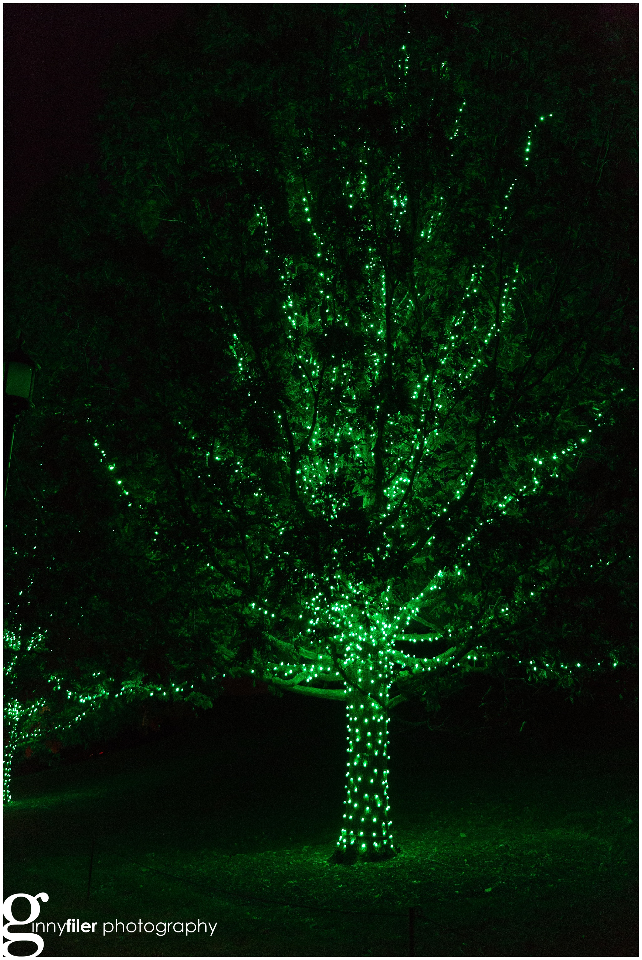 longwood_Christmas_0027.jpg