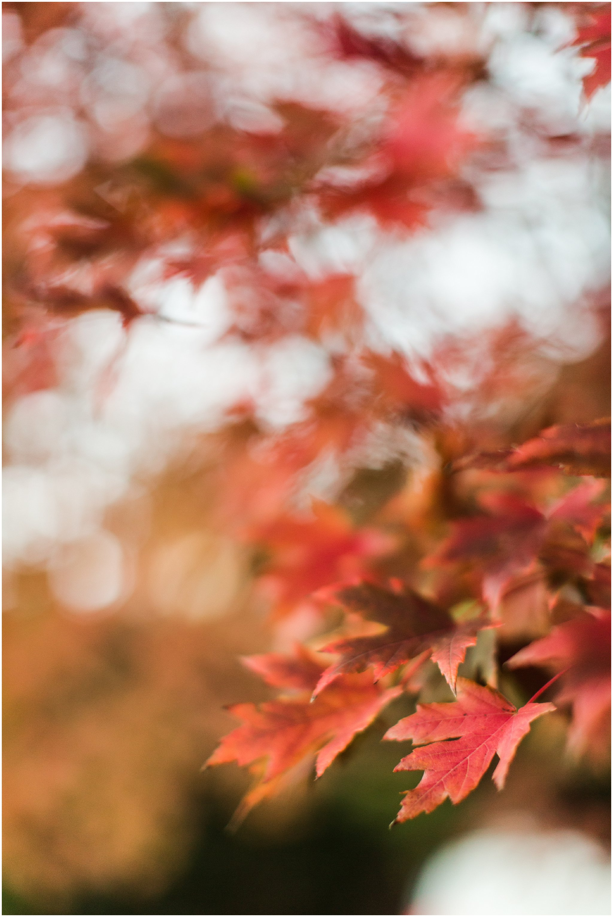 fall_leaves_0002.jpg