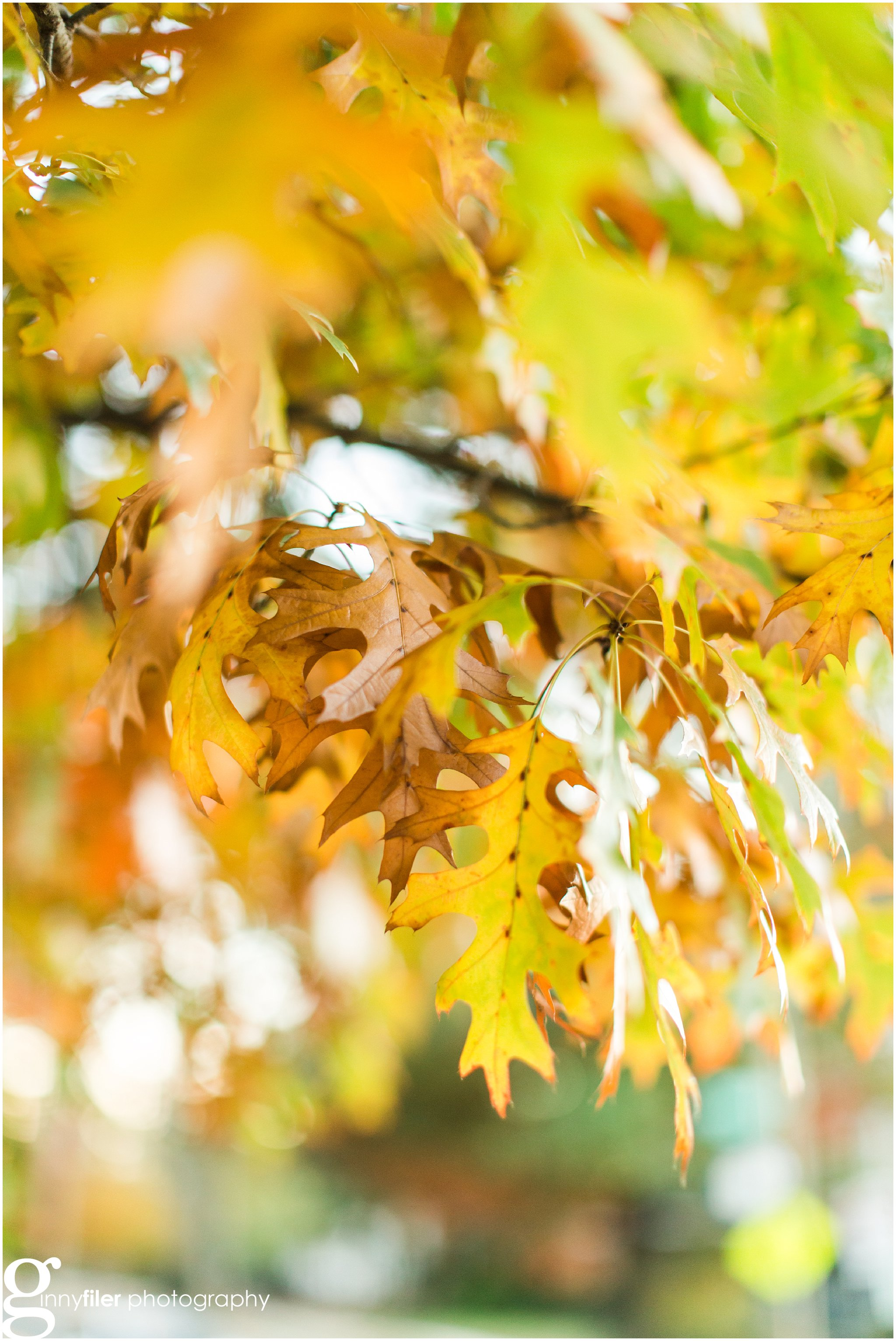 fall_leaves_0011.jpg