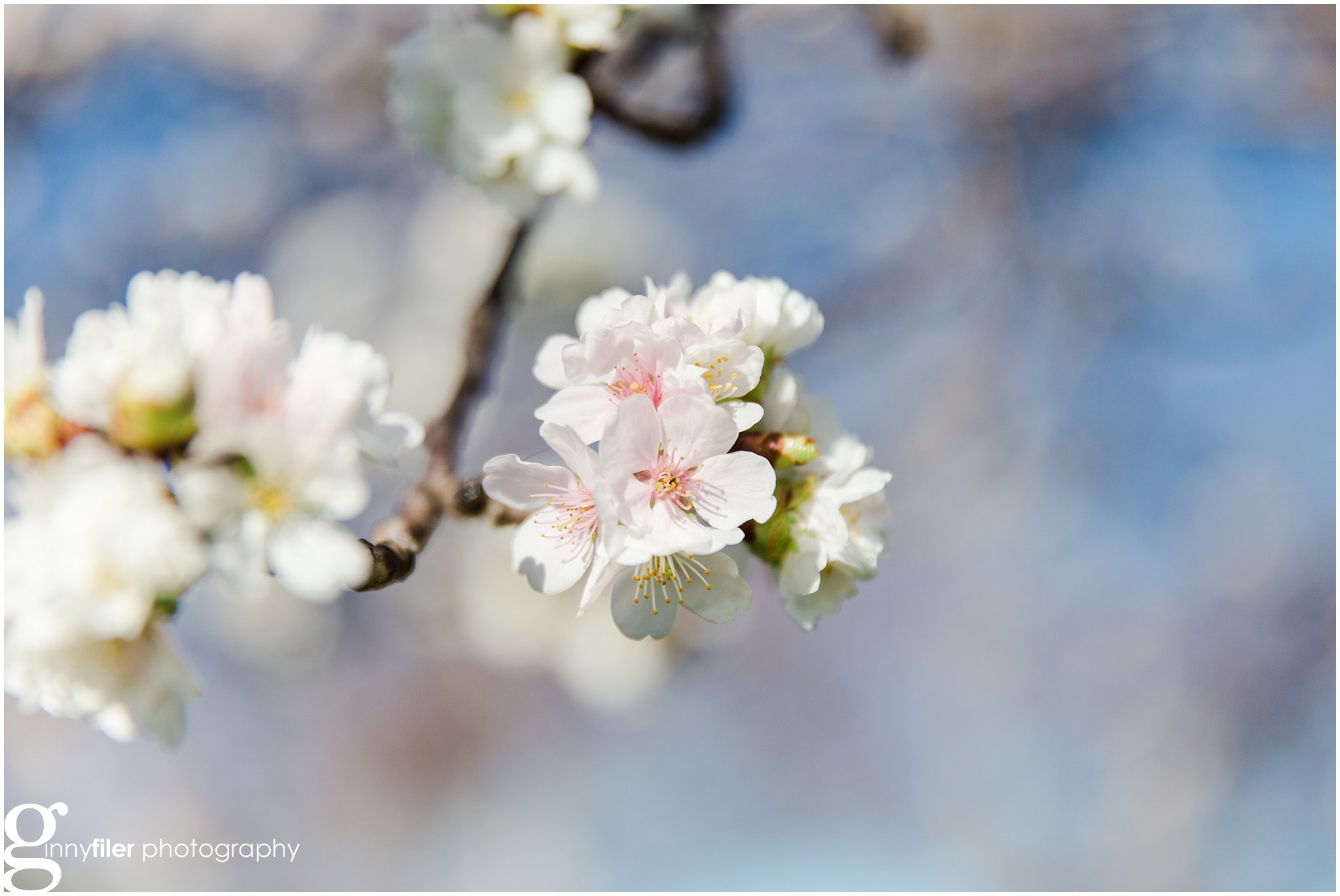 cherry_blossoms_washingtondc_photographer_0058