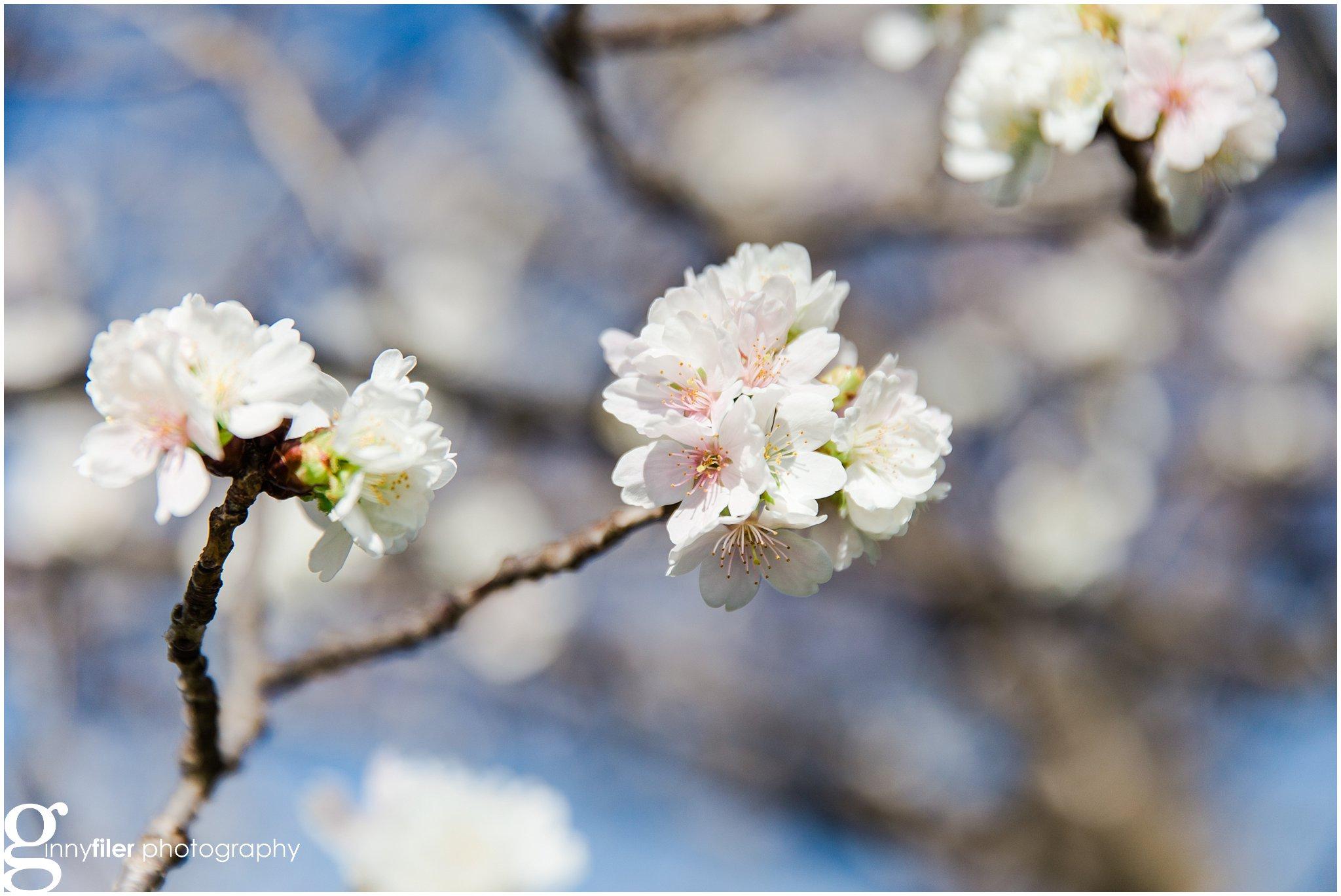 cherry_blossoms_washingtondc_photographer_0059
