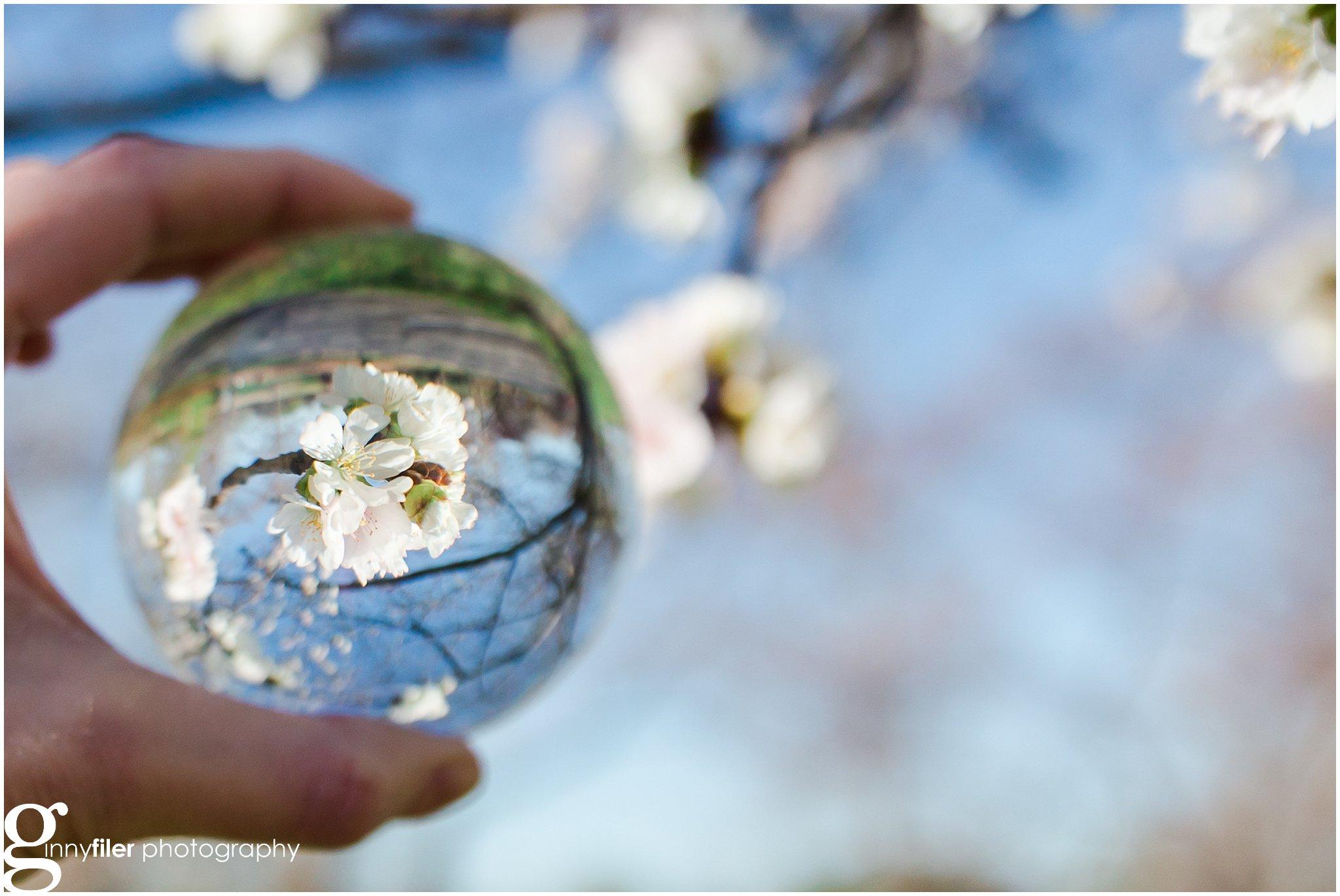 cherry_blossoms_washingtondc_photographer_0061