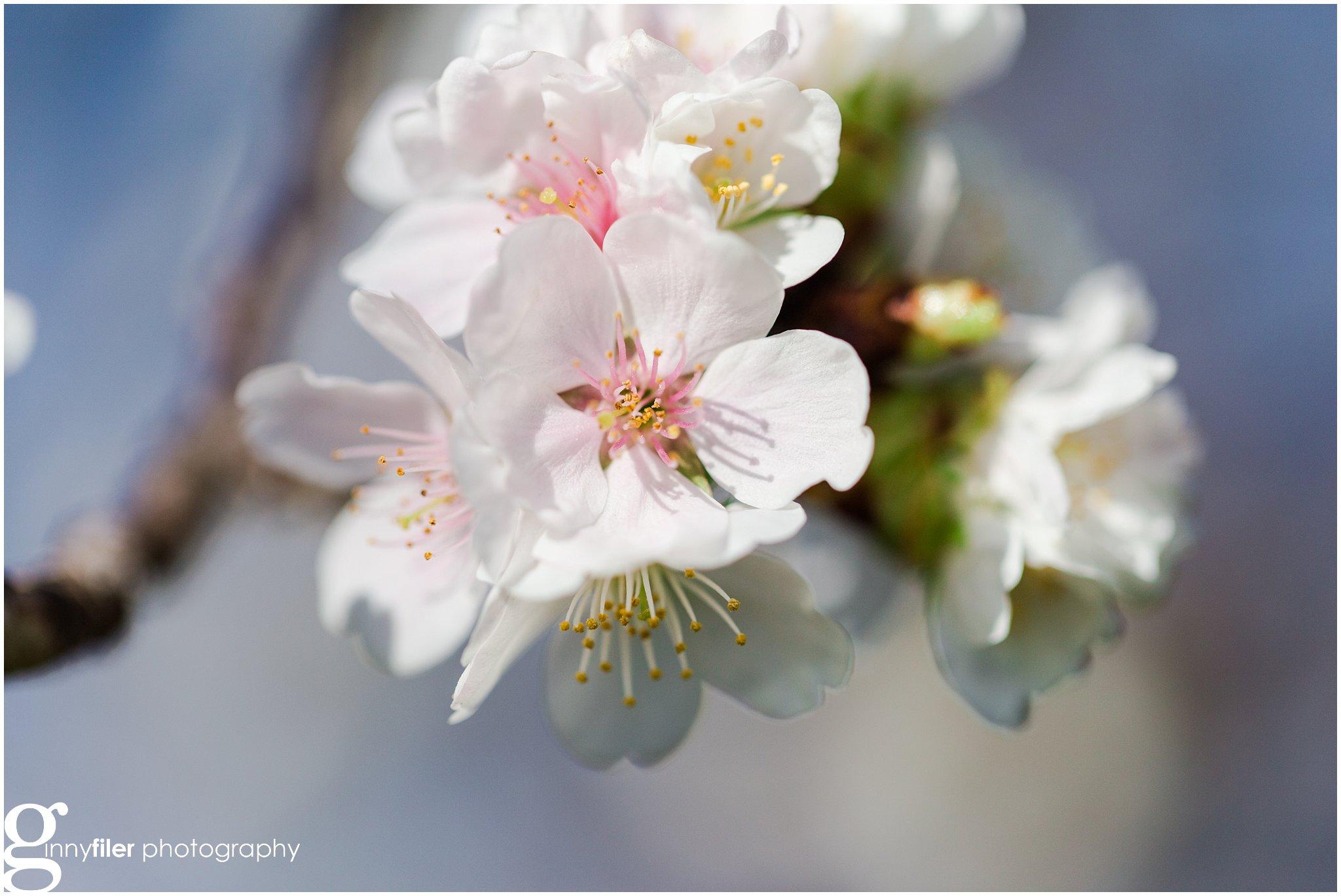 cherry_blossoms_washingtondc_photographer_0062