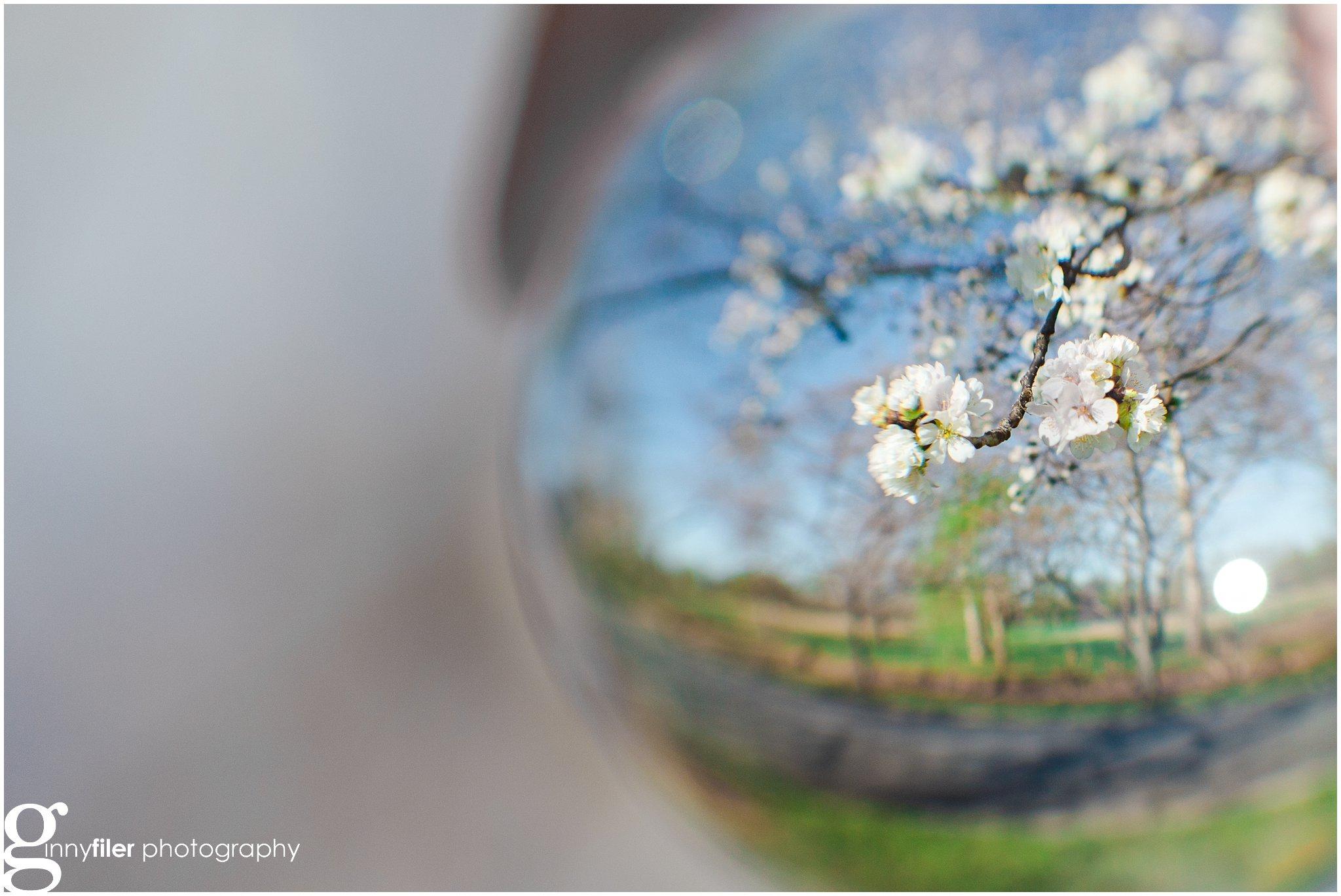 cherry_blossoms_washingtondc_photographer_0063