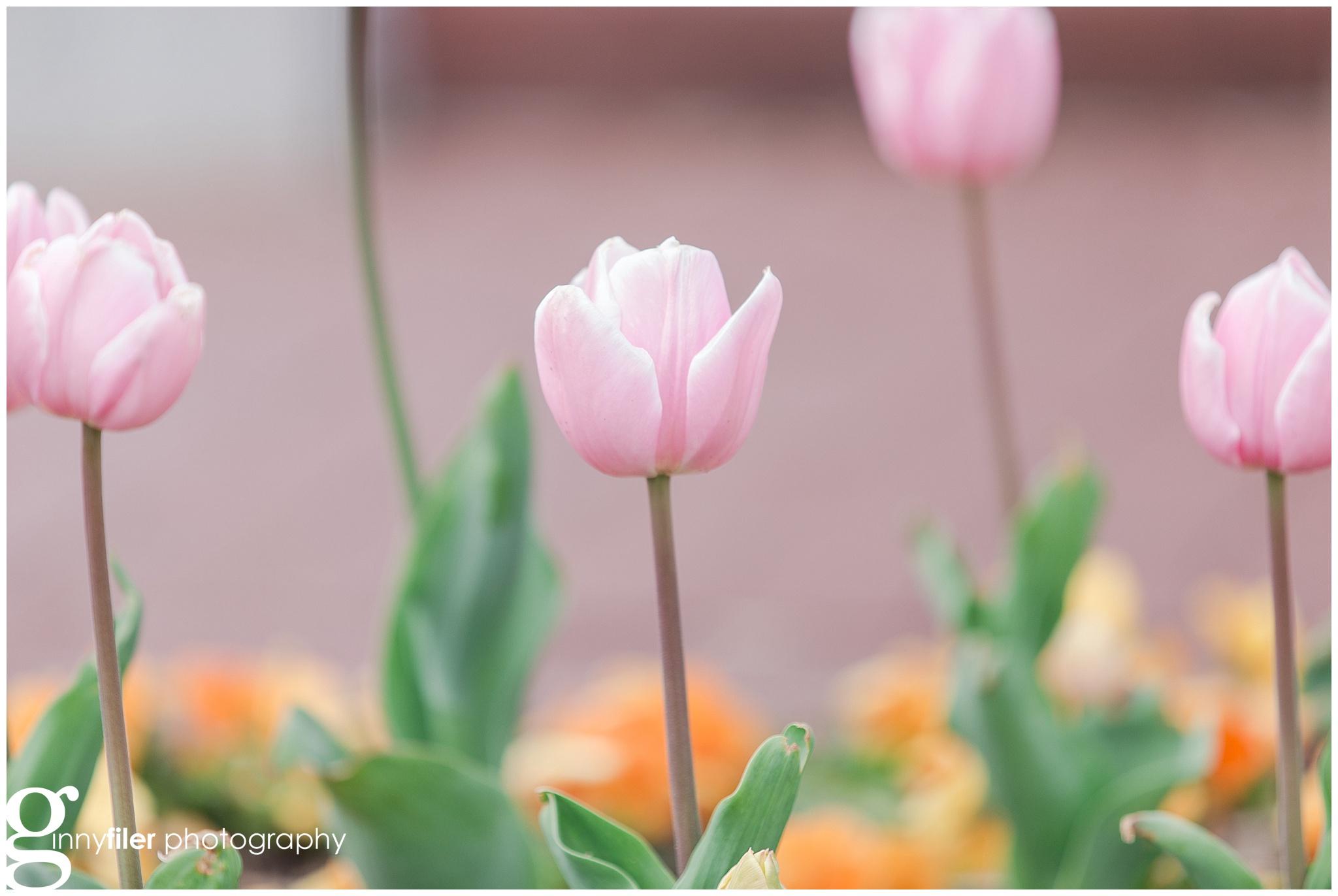 national_arboreteum_0099.jpg