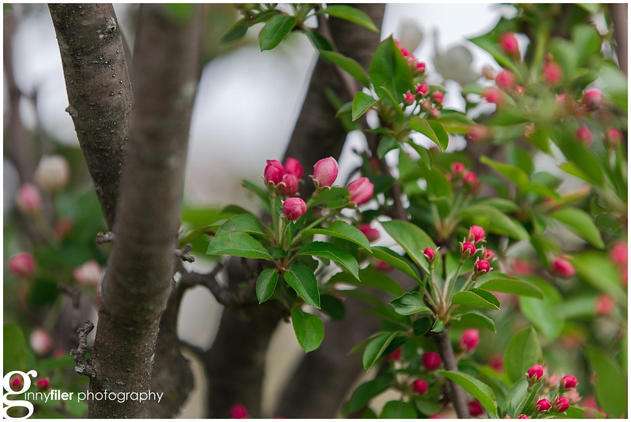 national_arboreteum_0098.jpg