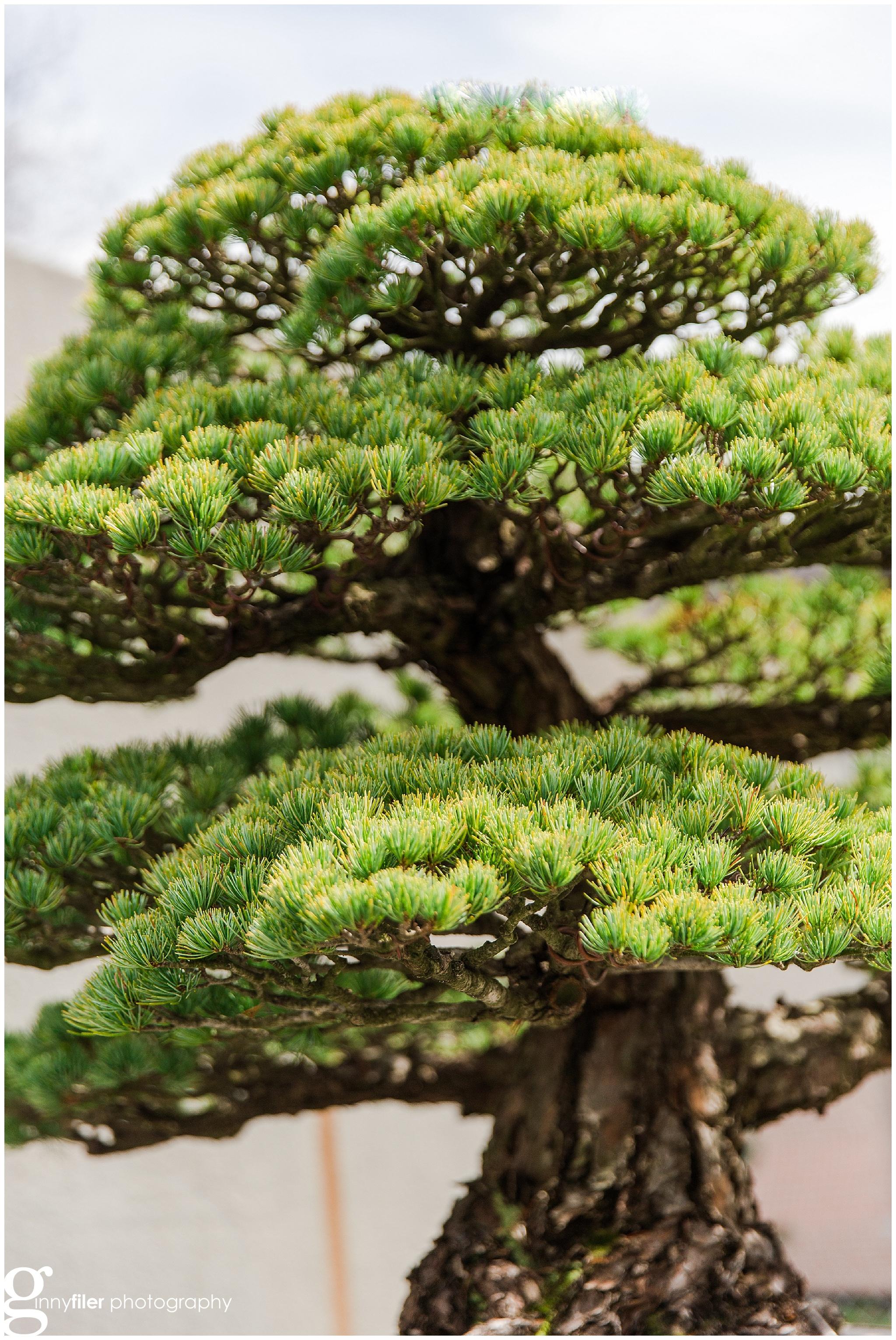 national_arboreteum_0105.jpg